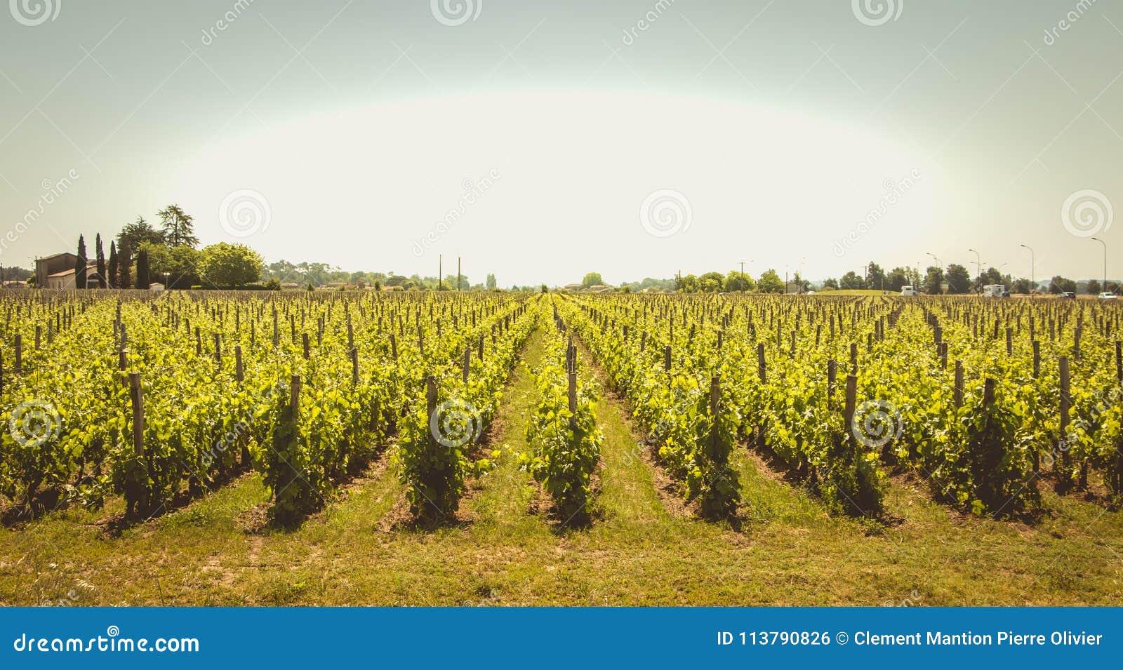 Vignoble de Saint Emilion, France, près de Bordeaux à la fin de s