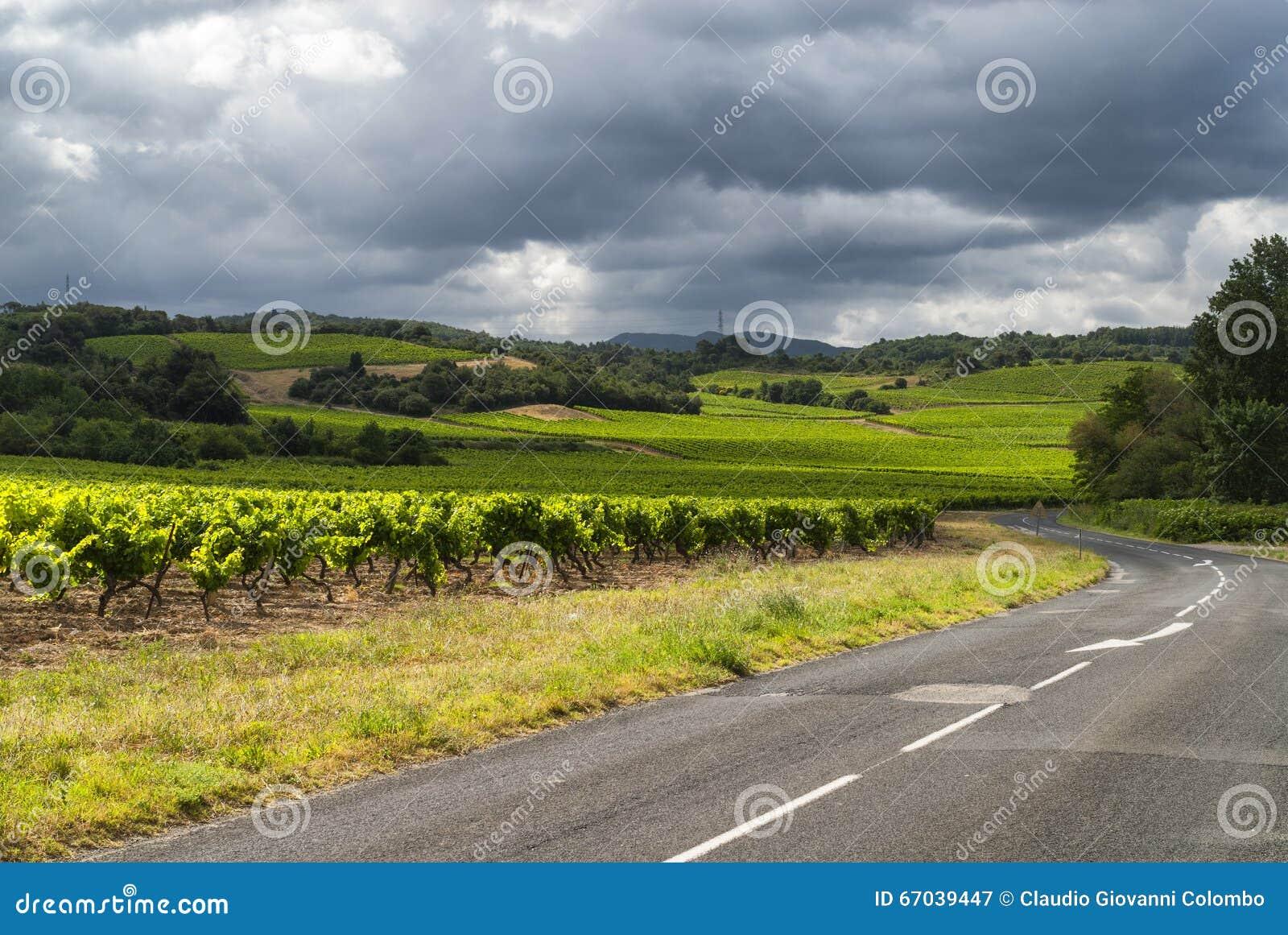 Vignoble près de Carcassonne (Frances)