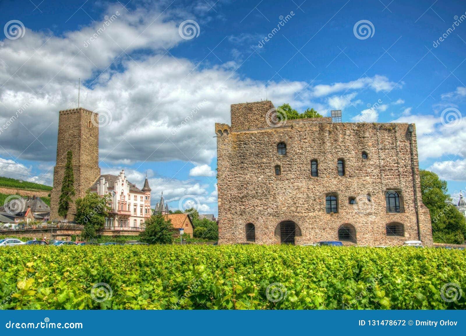 Vignoble près de forteresse médiévale Boosenburg de château dans Ruedesheim, Hesse, Allemagne