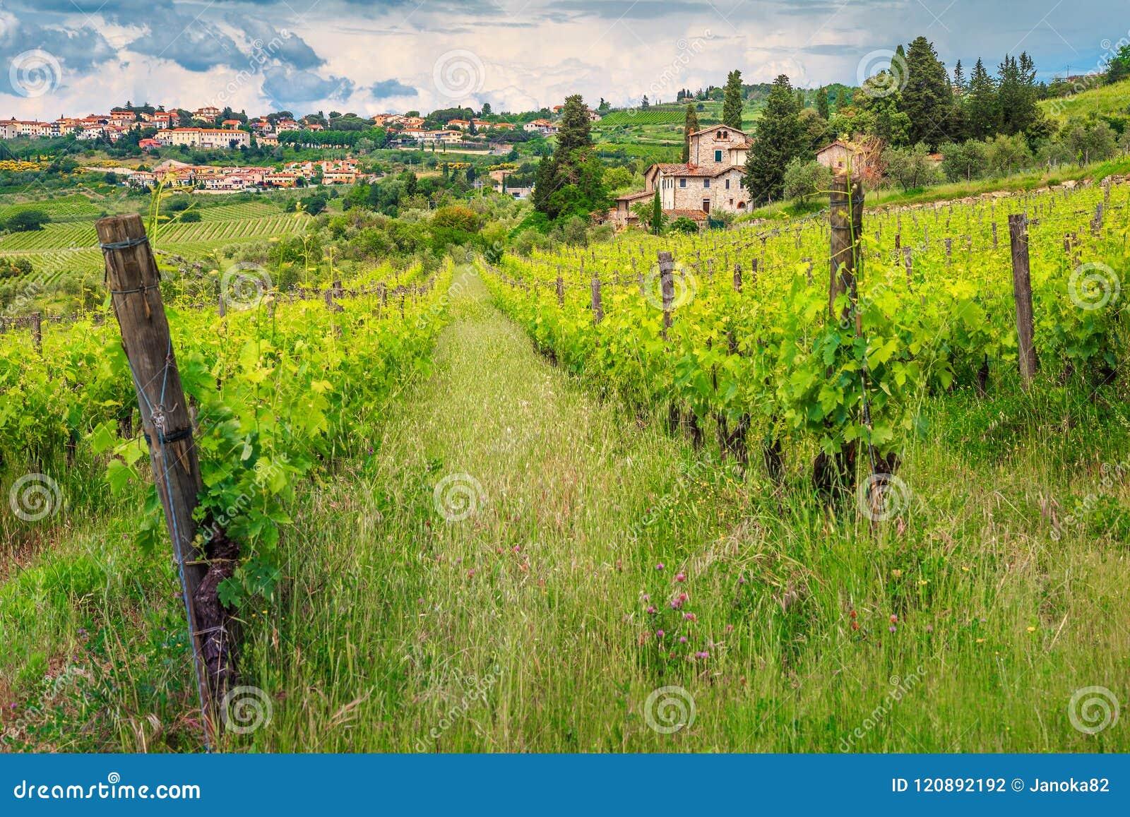 Vignoble spectaculaire avec les maisons en pierre, région de chianti, Toscane, Italie, l Europe