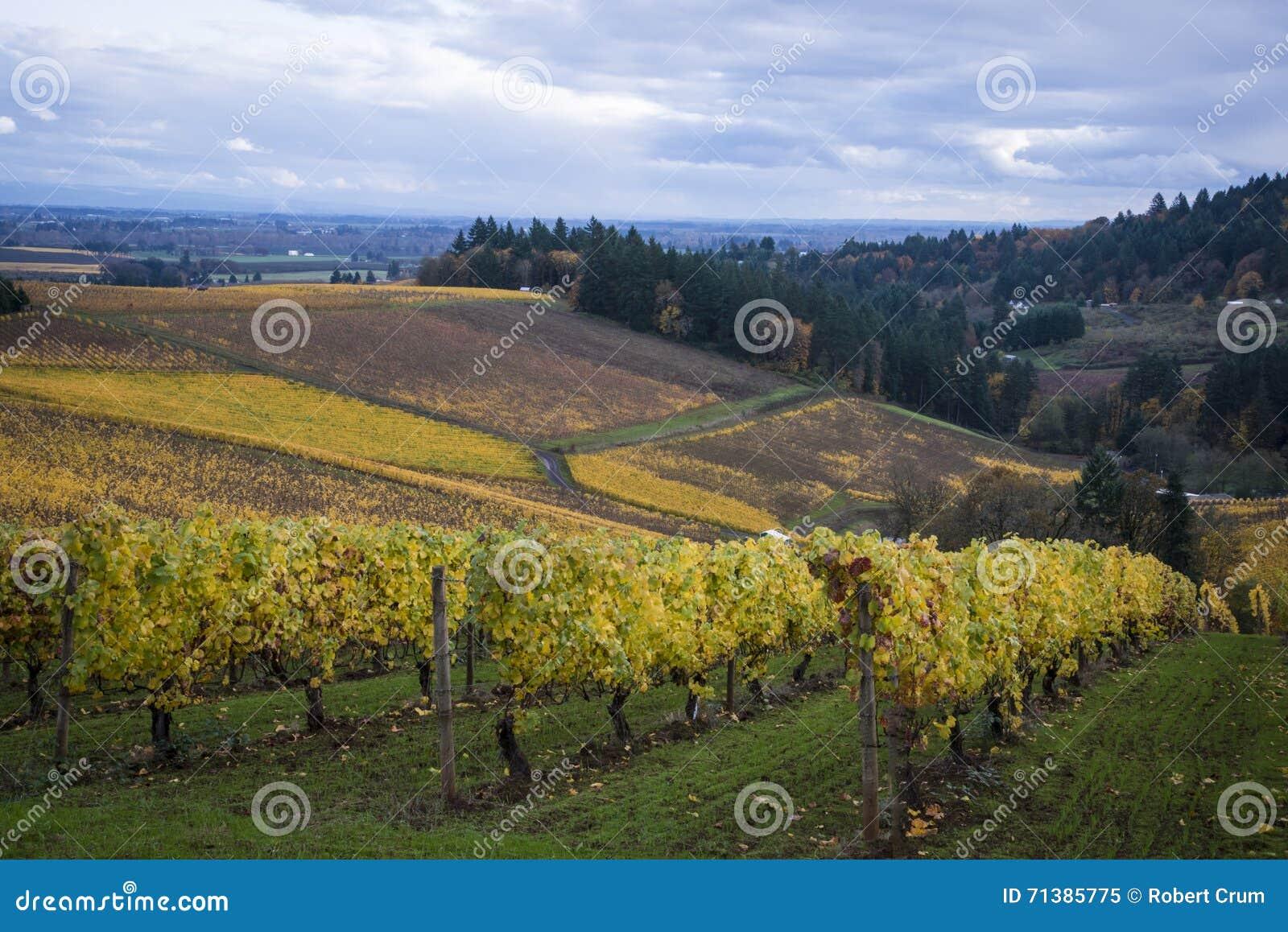 Vignobles d automne, vallée de Willamette, Orégon