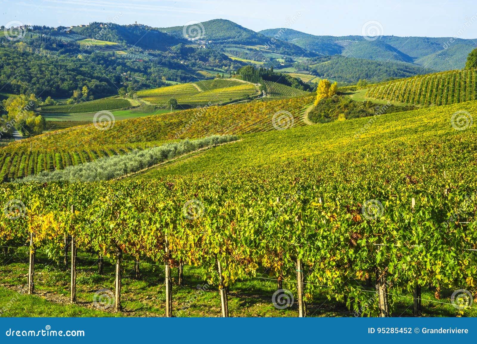 Vignobles dans le chianti Toscane sous un ciel bleu avec les nuages blancs