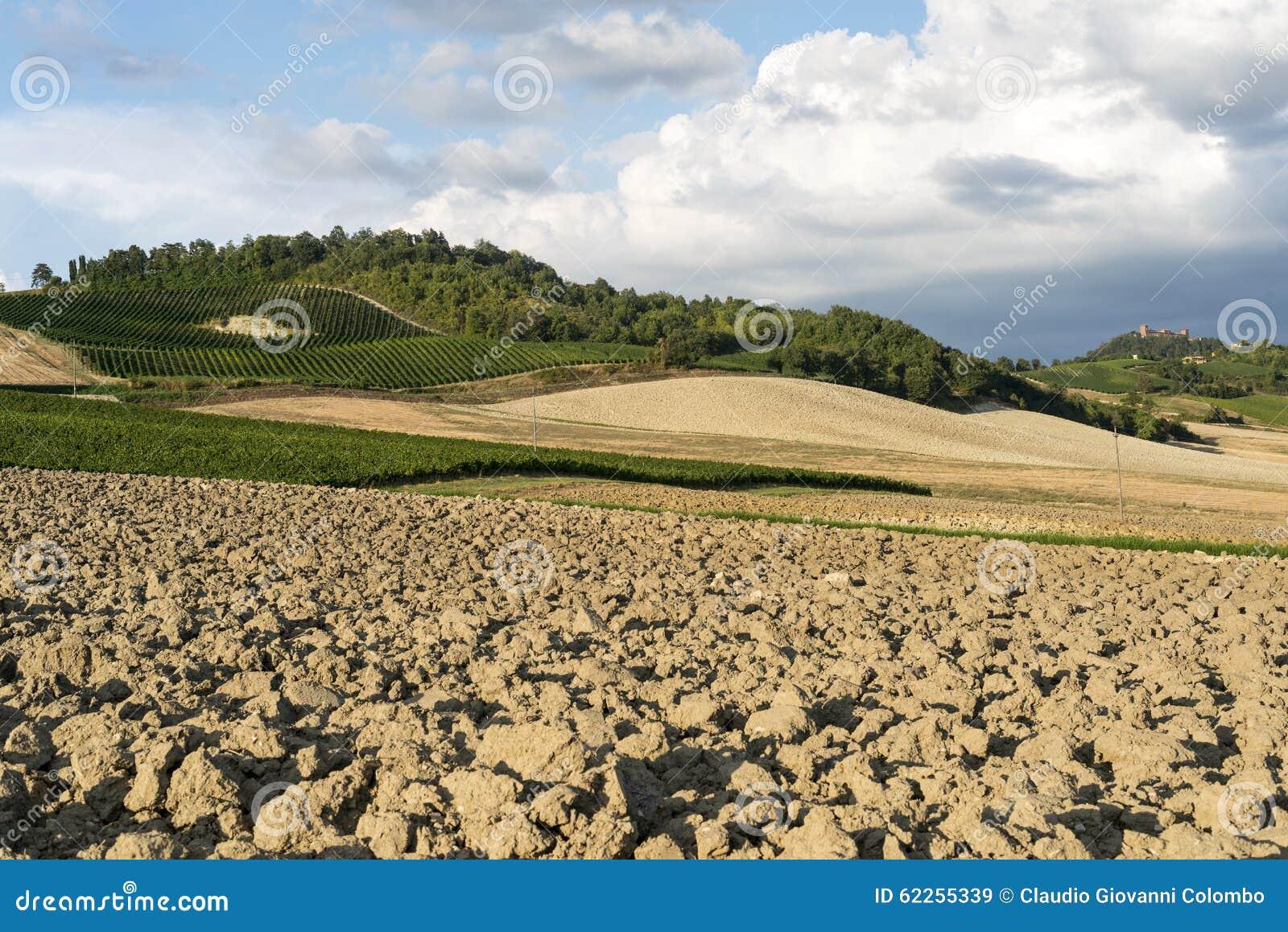 Vignobles dans oltrepo pavese italie image stock image for Dans italien