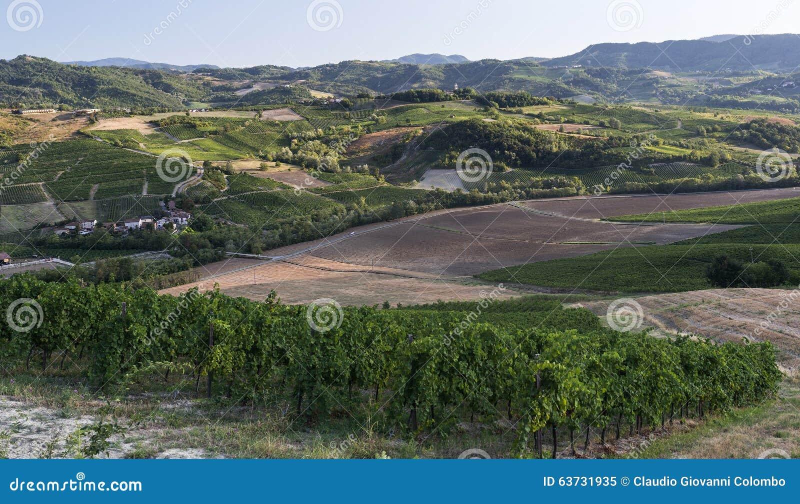 Vignobles dans oltrepo pavese italie photo stock image for Dans italien