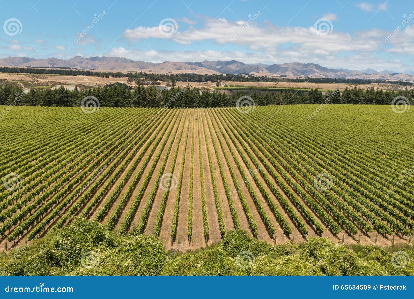 Vignobles de collines de Wither