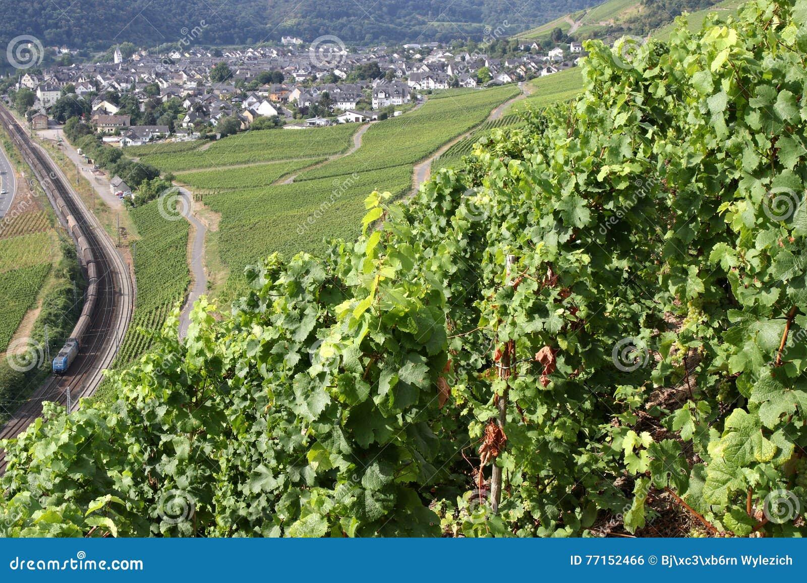 Vignobles de la Moselle