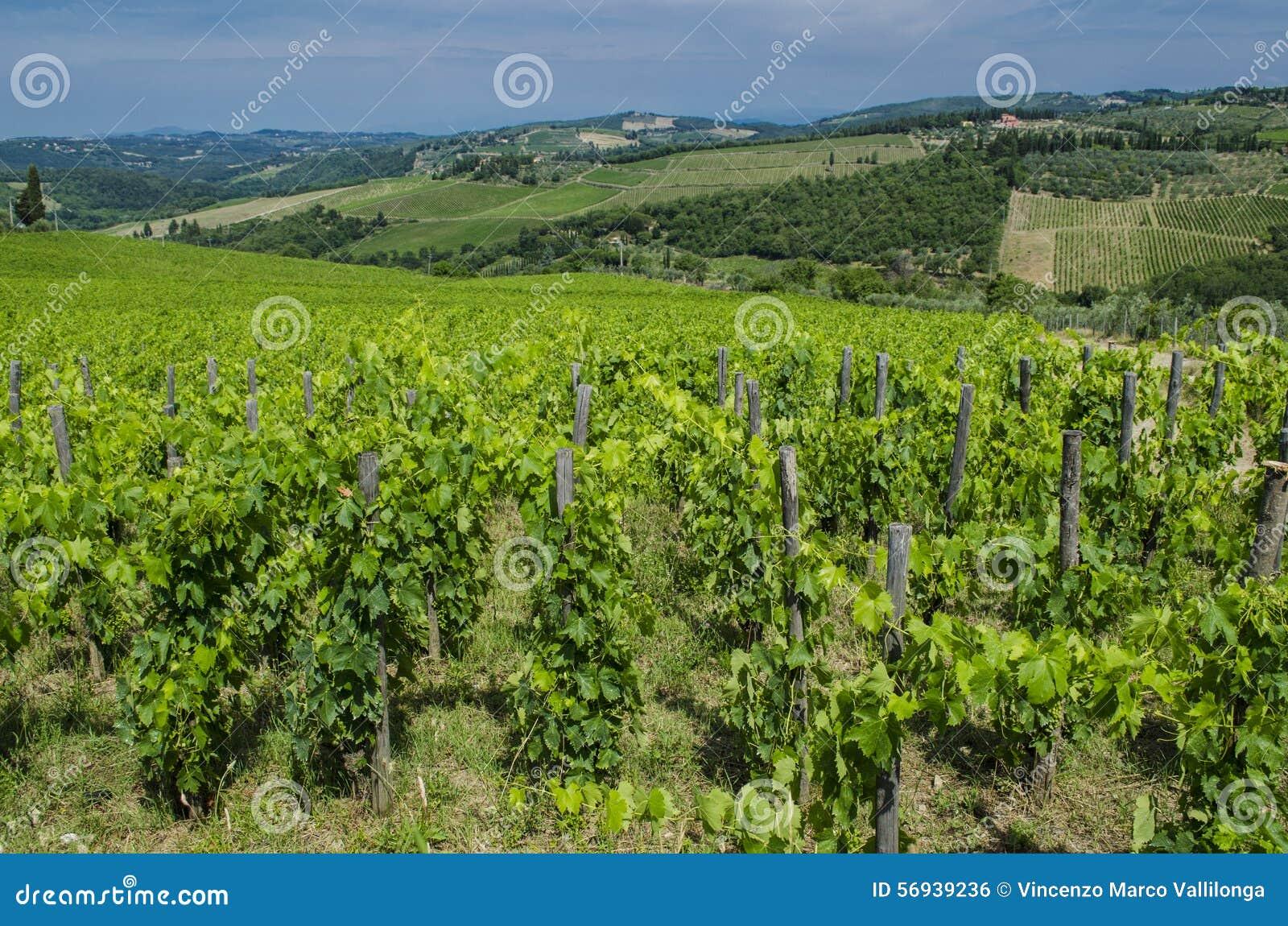 Vignobles du Toscan de champ de chianti