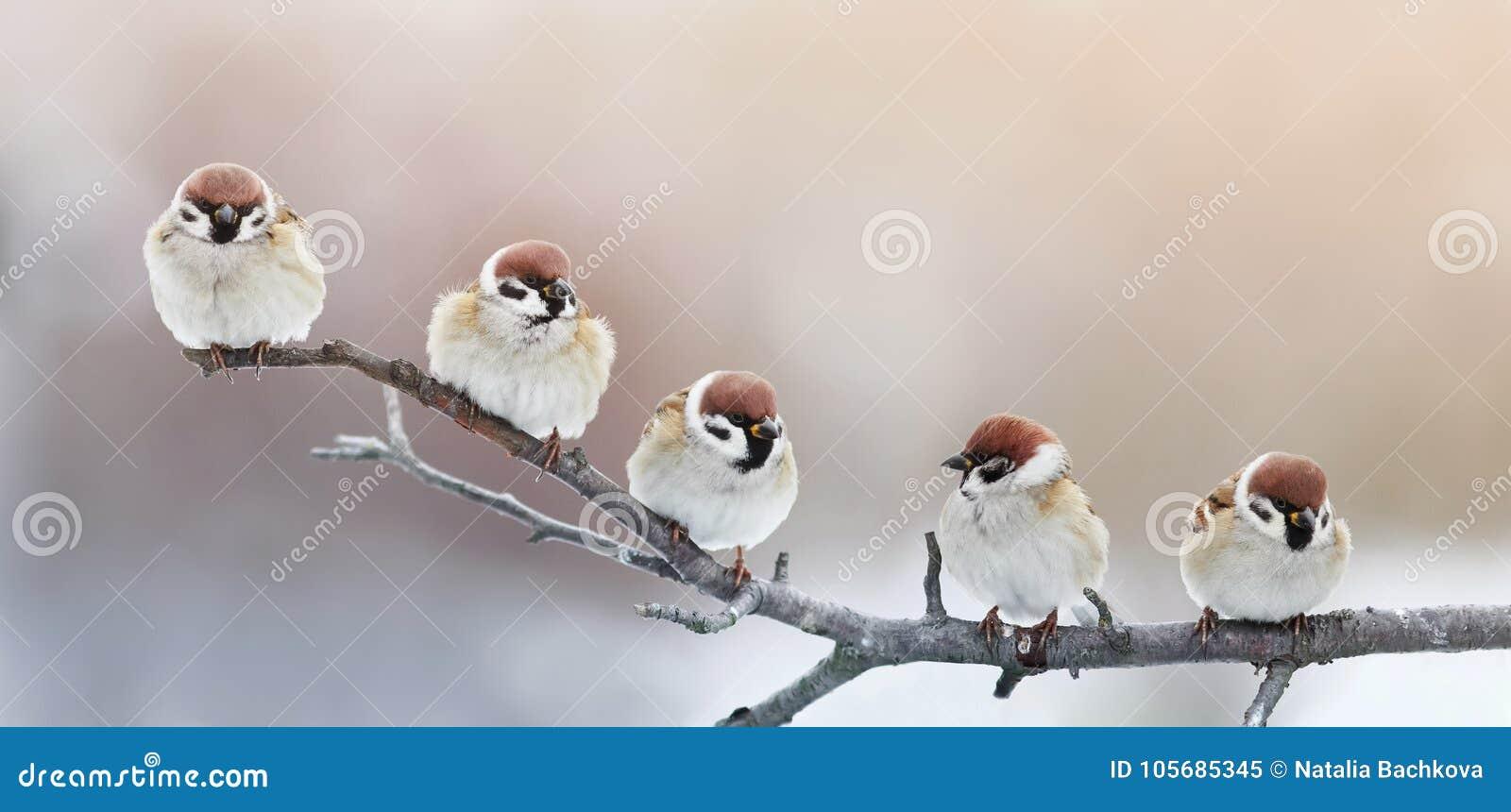 Vijf grappige kleine vogelsmussen die op een tak in de winter g zitten