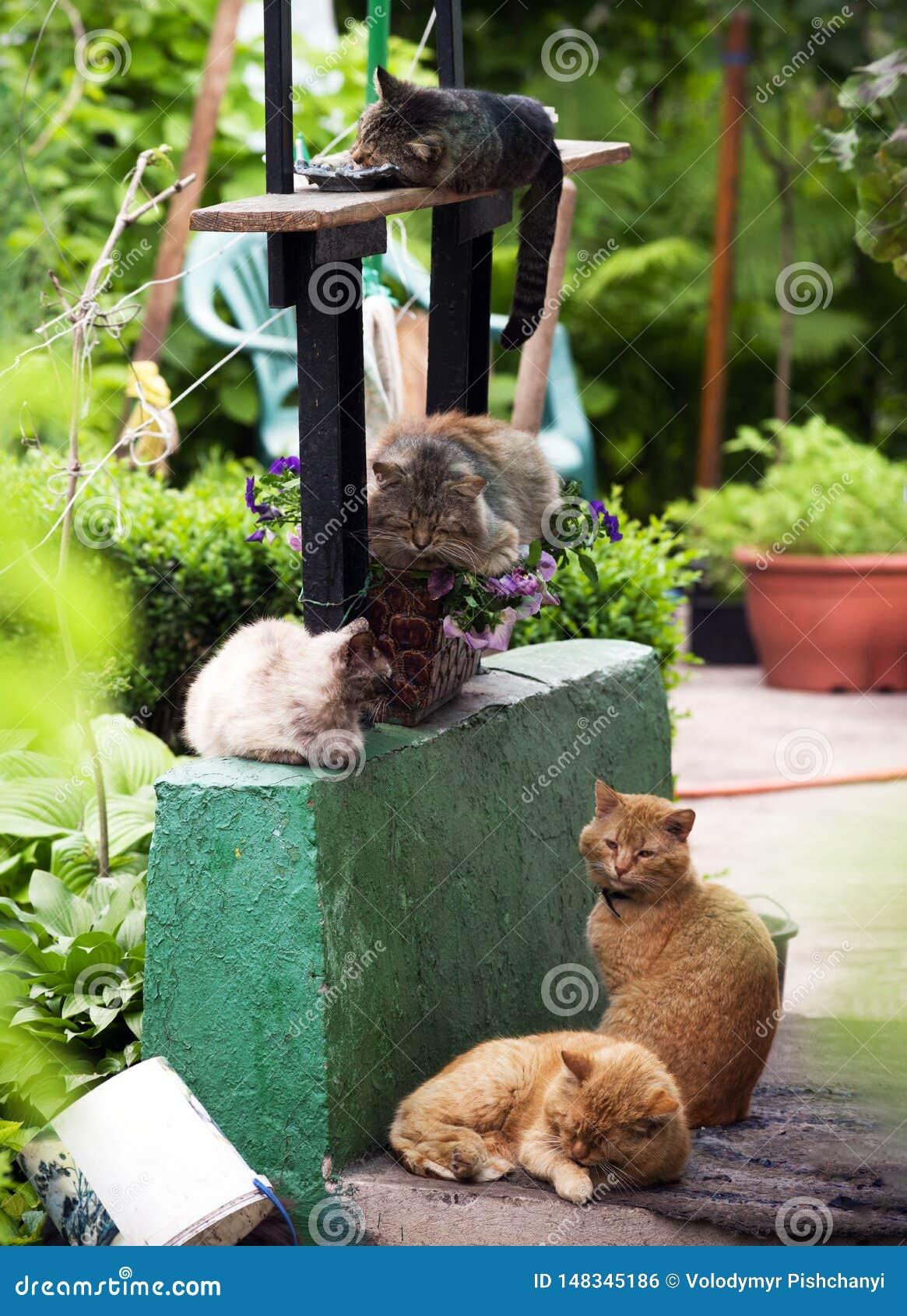 Vijf verschillende katten slapen op de portiek van een hut