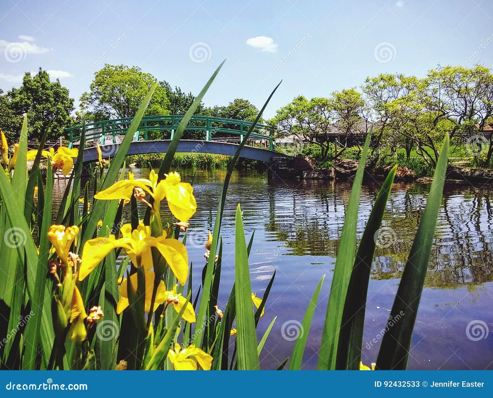 Vijver en brug