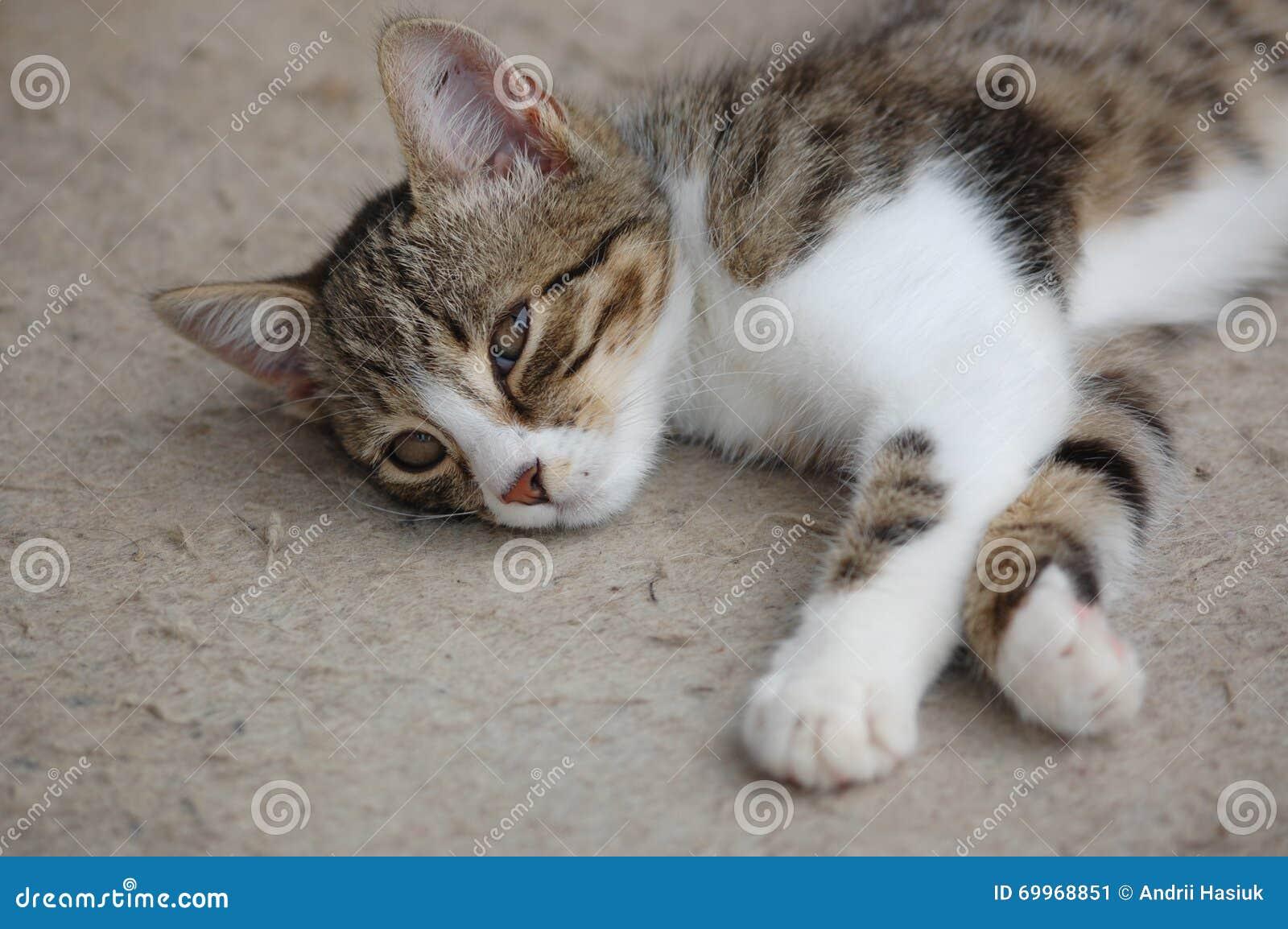 Vila för katt
