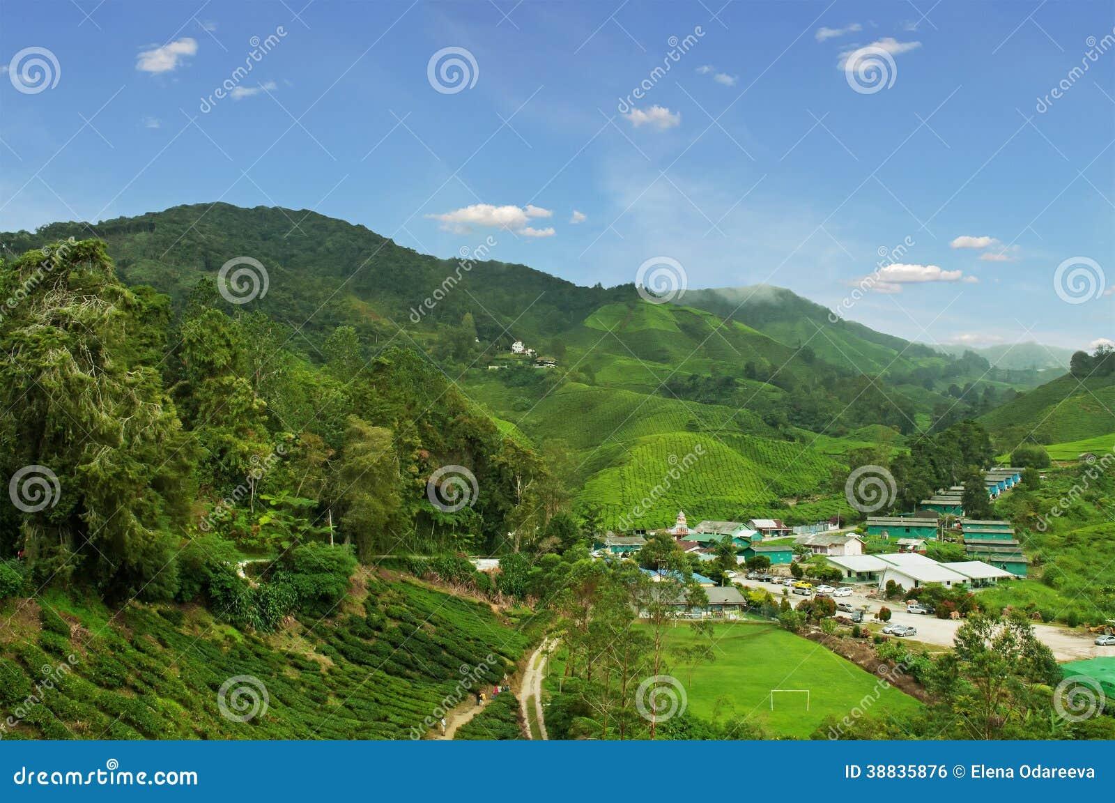 Vila local na plantação de chá