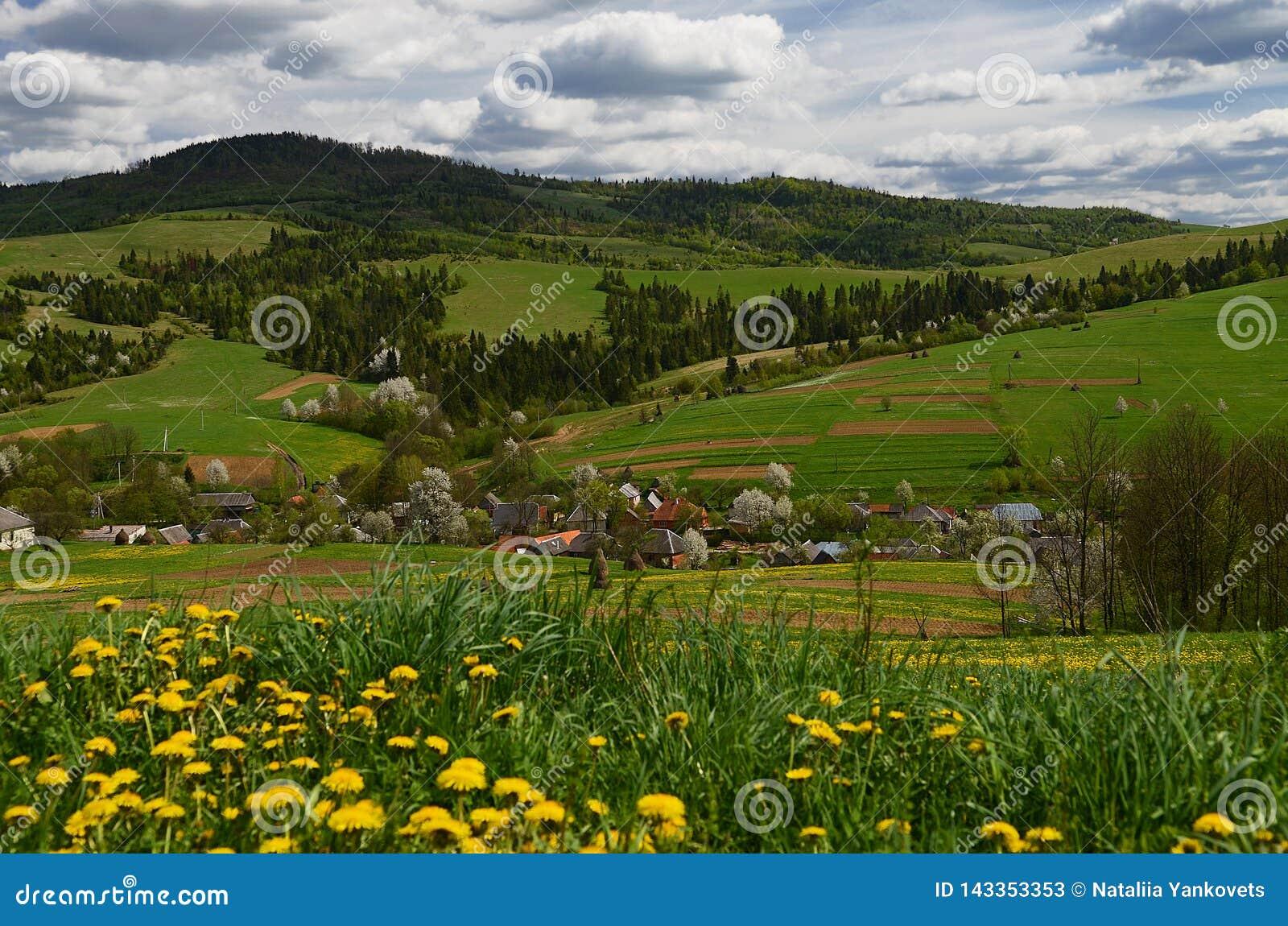 A vila ucraniana montanhosa pitoresca é cercada por flores da mola