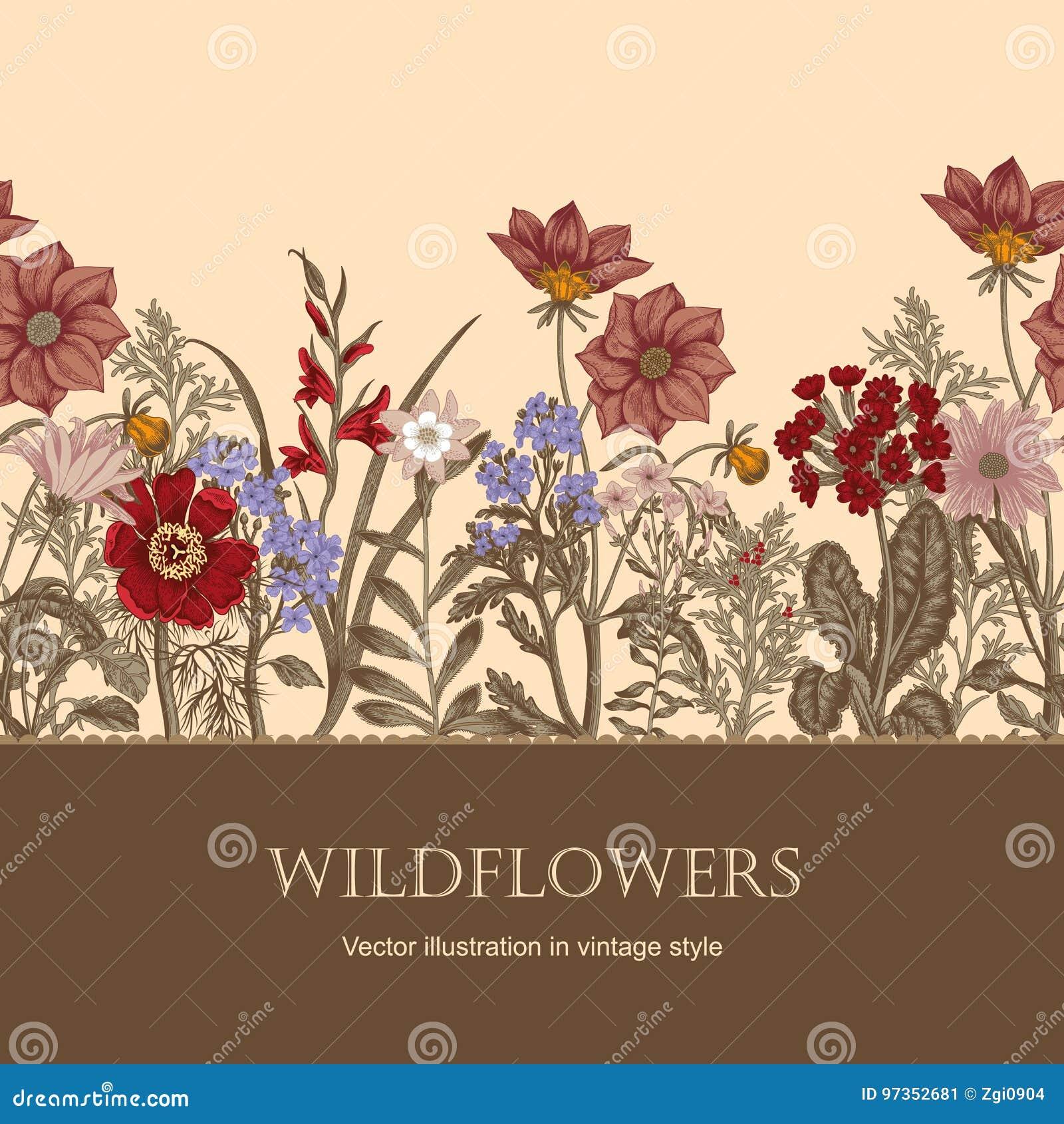 Vildblommar Vektorillustrationen i tappning utformar festlig vykort