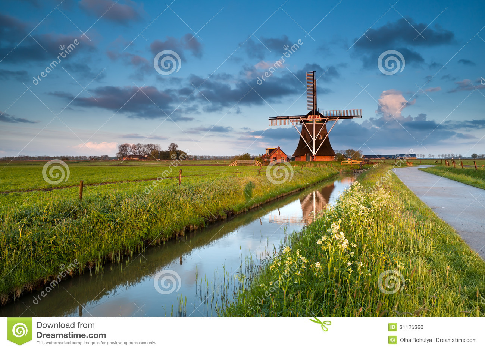 Vildblommor och holländsk väderkvarn på soluppgång