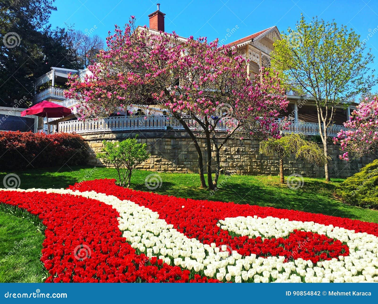 Villa in Garden and Flowers
