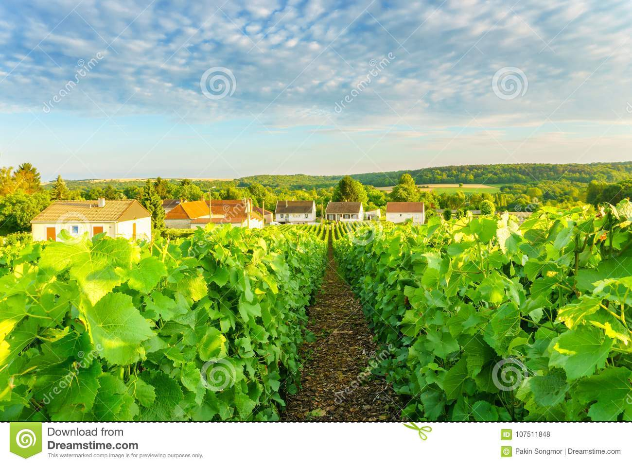 Village countryside and champagne vineyards at montagne de reims