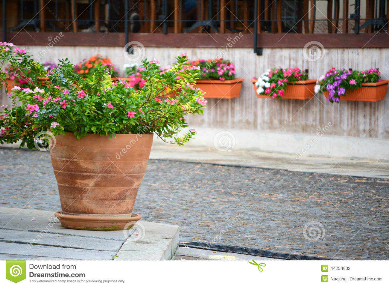 Vinca Flower Pots Stock Photo Image Of Background Chain 44254632