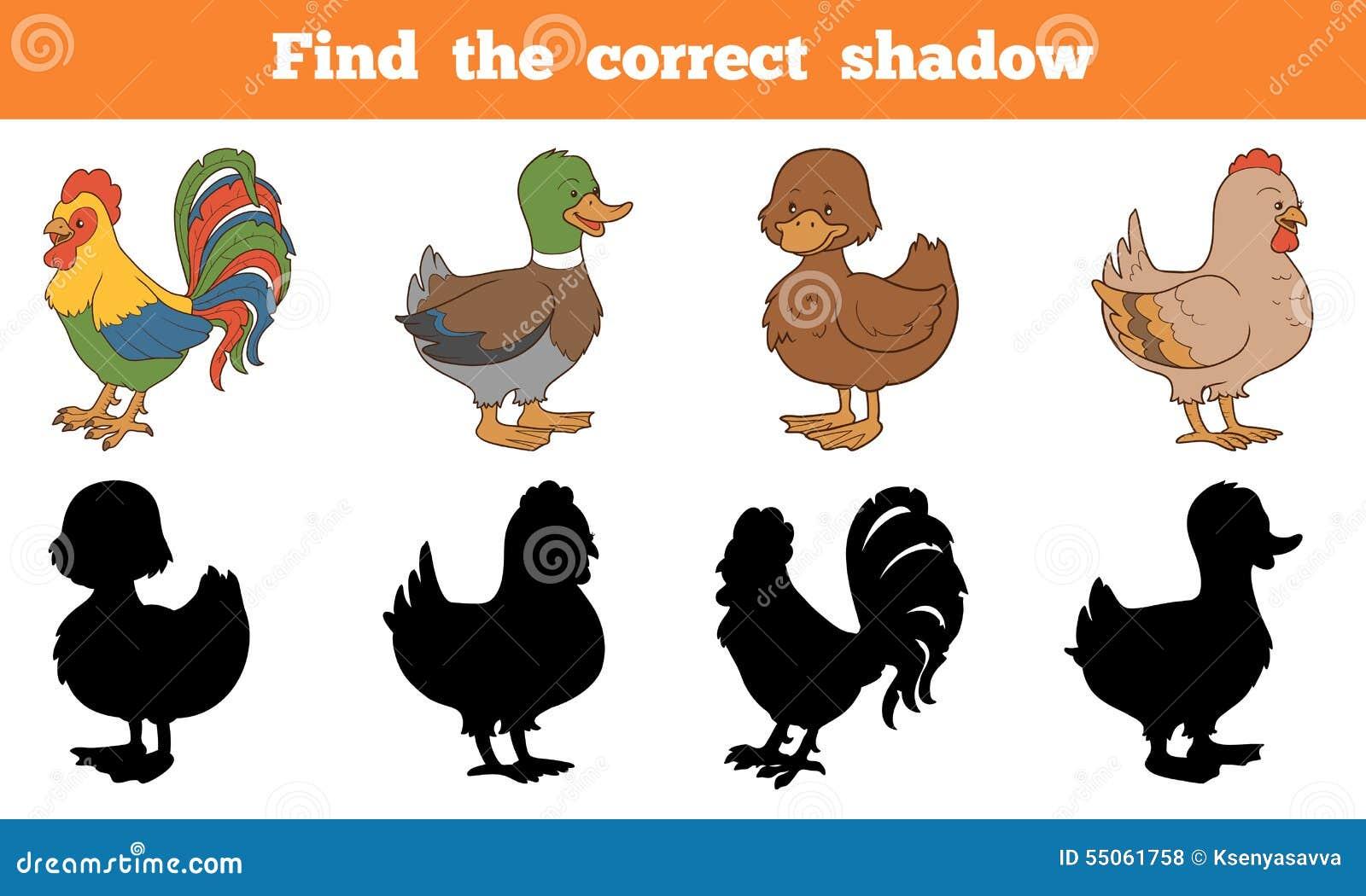 Vind de correcte schaduw: landbouwbedrijfdieren (kip en eenden)