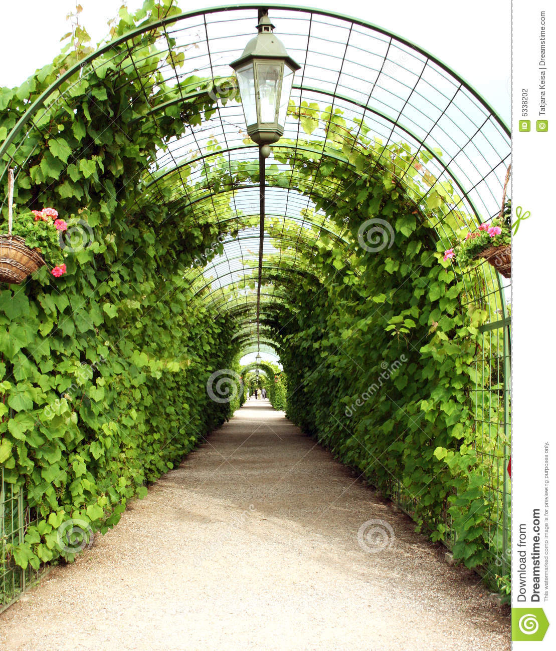 Vine Arbor Tunnel Stock Photo Image Of Garden Governor