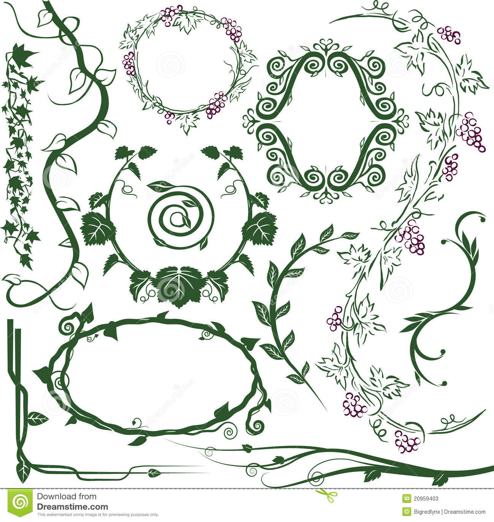 Flower Vine Line Drawing : Vine collection stock vector illustration of spiral