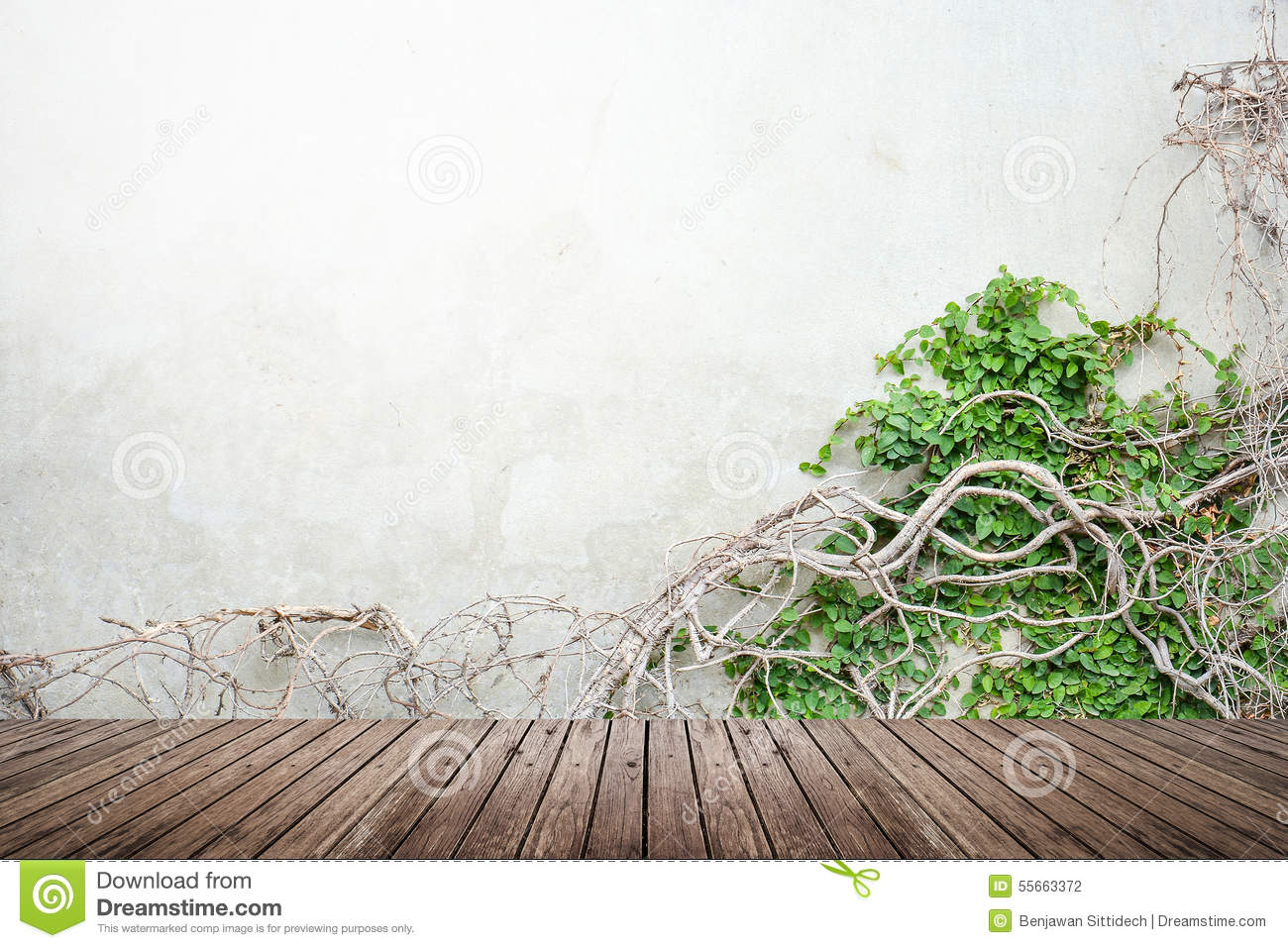 Vine On Concrete Wall And Wood Floor Stock Photo Image