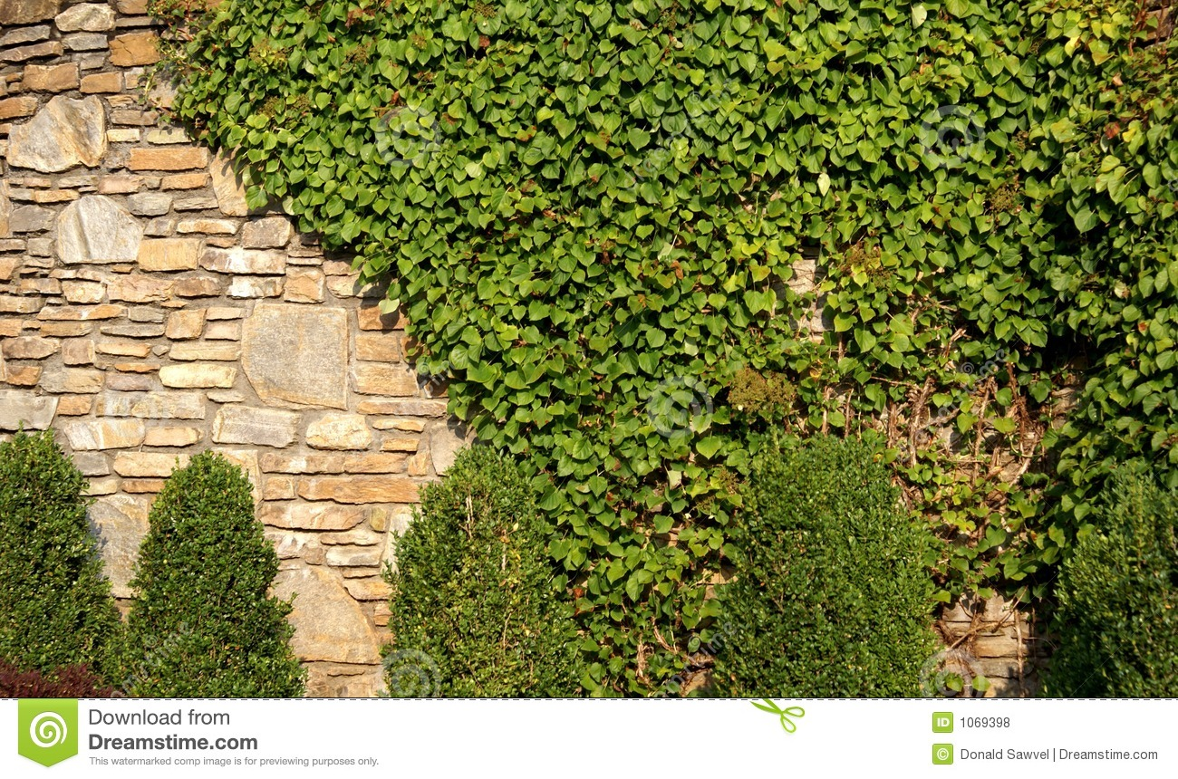 Vine Covered Rock Wall Stock Photo Image Of Background