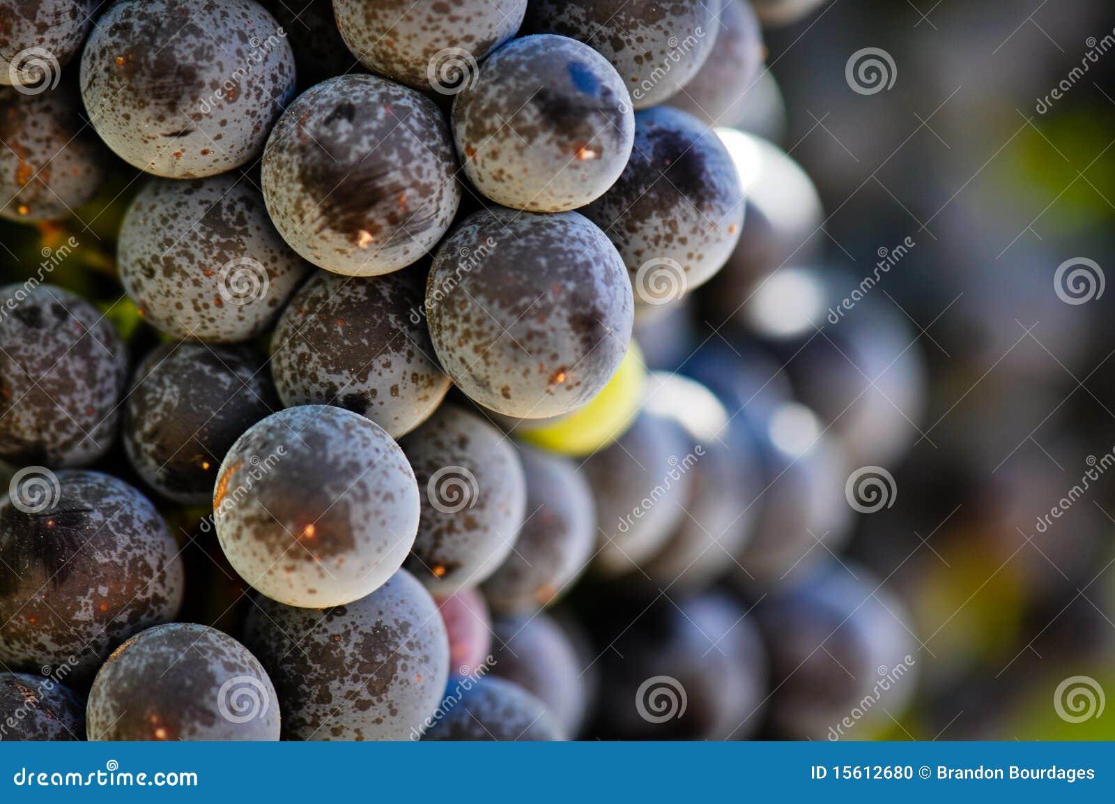 Vine för dal för druvanapa röd