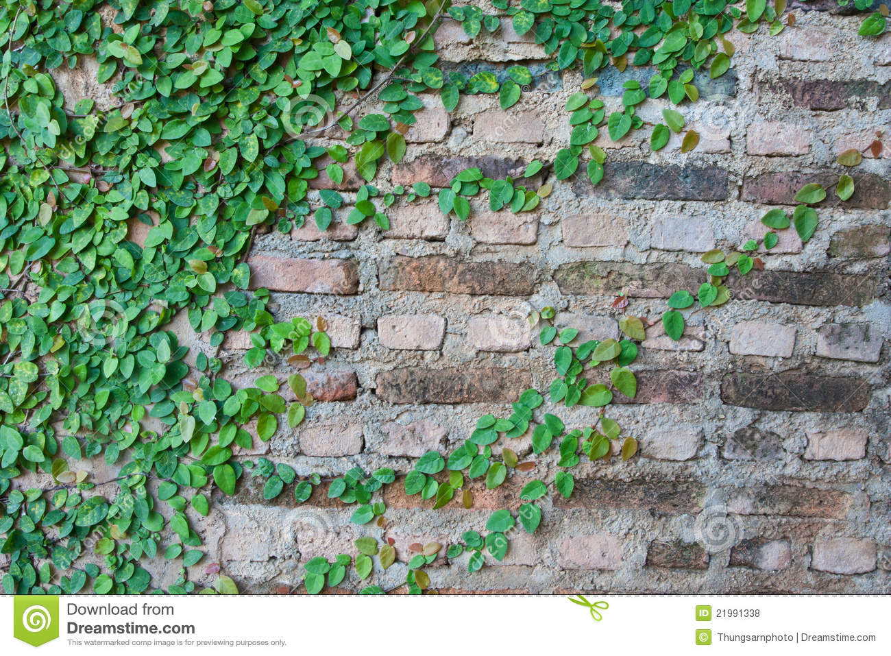 Vine Growing On A Brick Wall Stock Photo - Image of climb ...