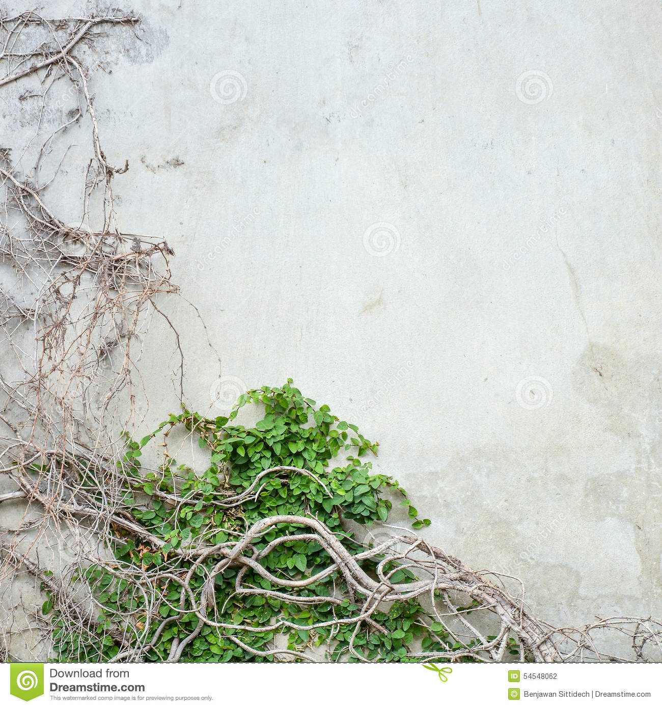 Vine Growing On Concrete Wall Stock Photo Image 54548062