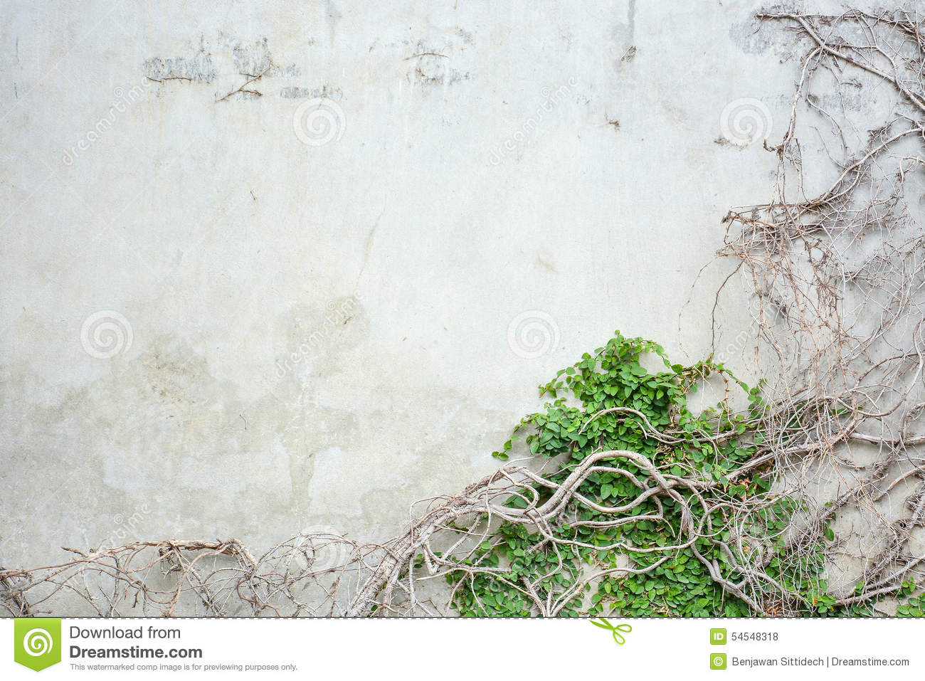 Vine Growing On Concrete Wall Stock Photo Image 54548318