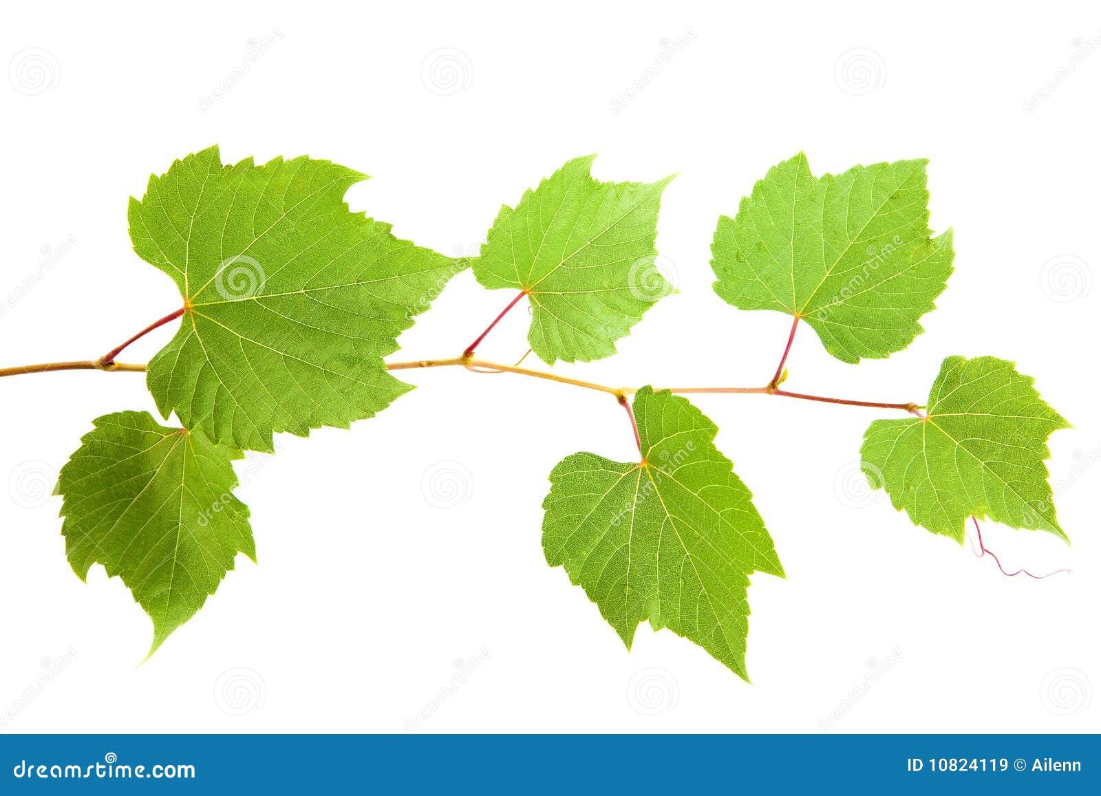 how to make vine leaves