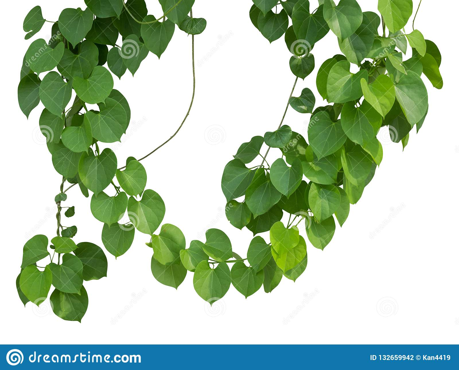 Vine plants climbing on transparent layer have clipping path