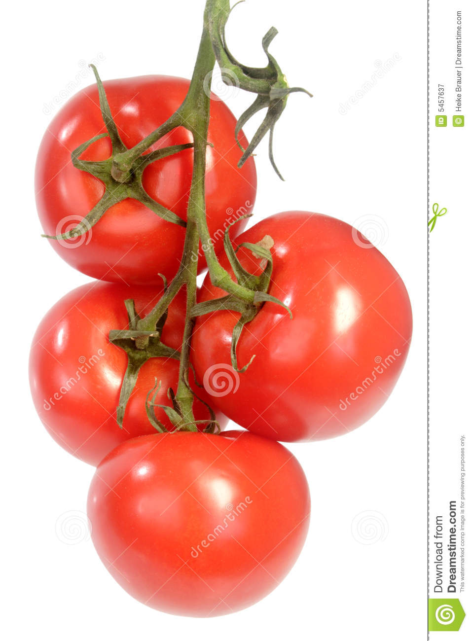 Displaying 17> Images For - Tomato Vines Clip Art...