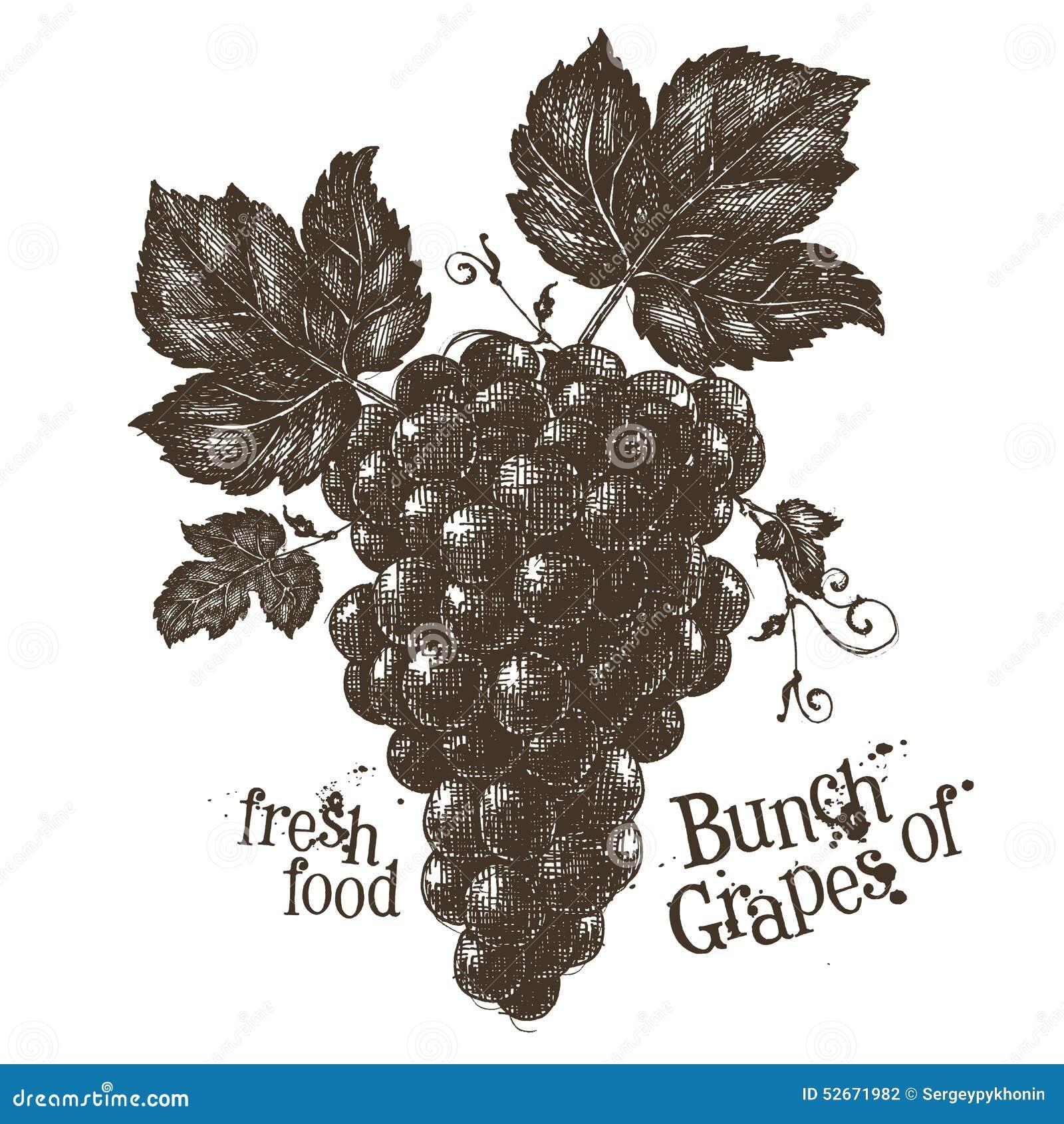 vine vector logo design template grapevine or stock vector