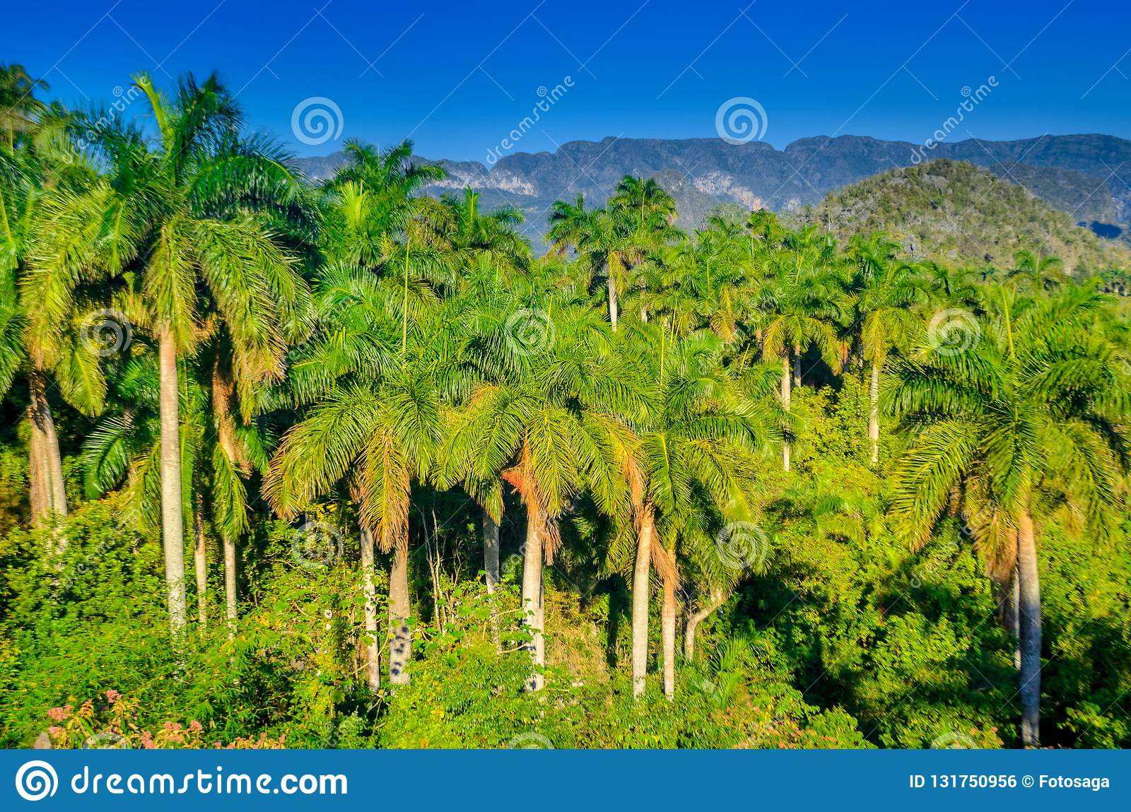 Vineales, countryside, Cuban nature