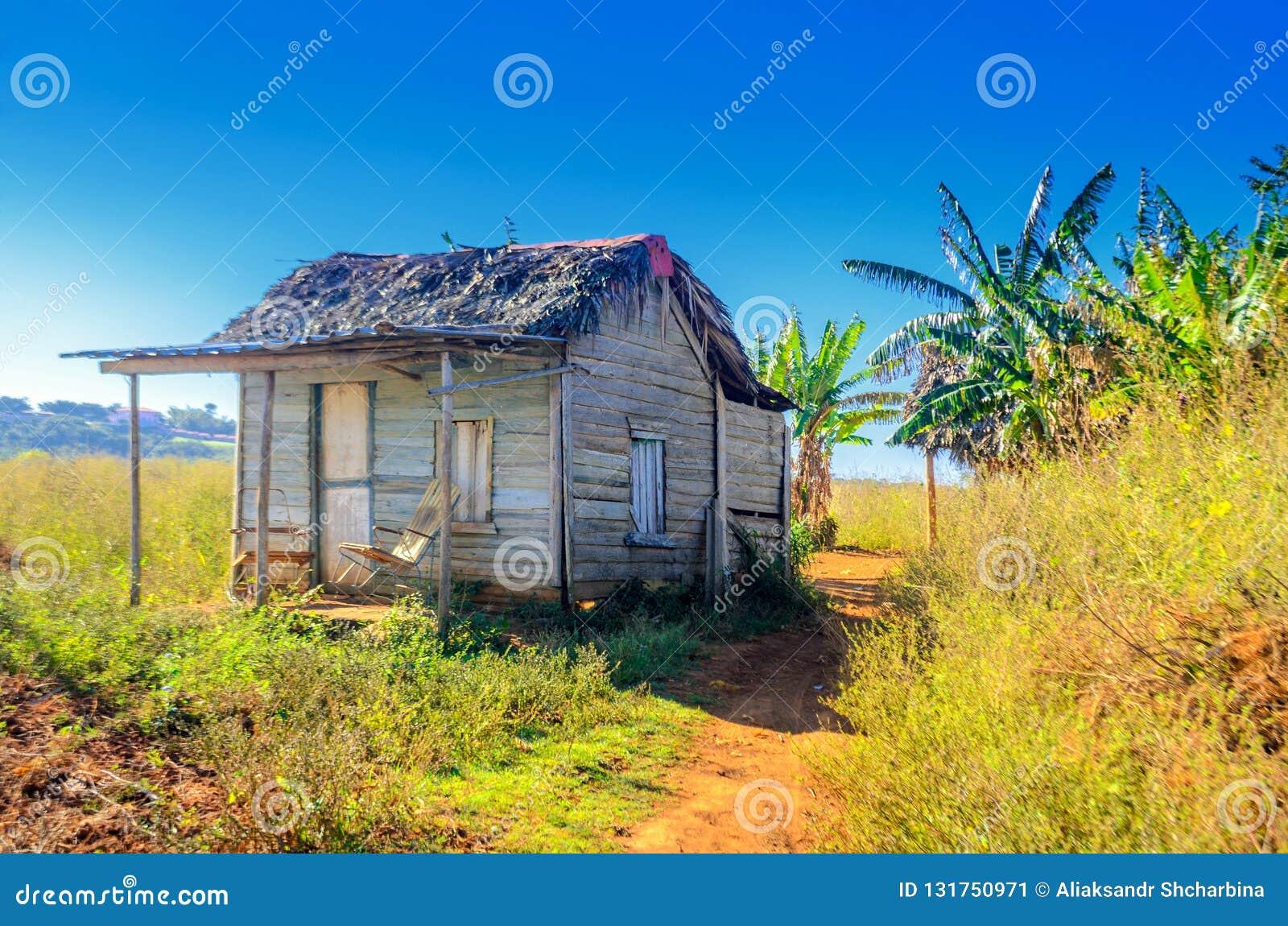 Rural abandoned Cuban tobacco farm