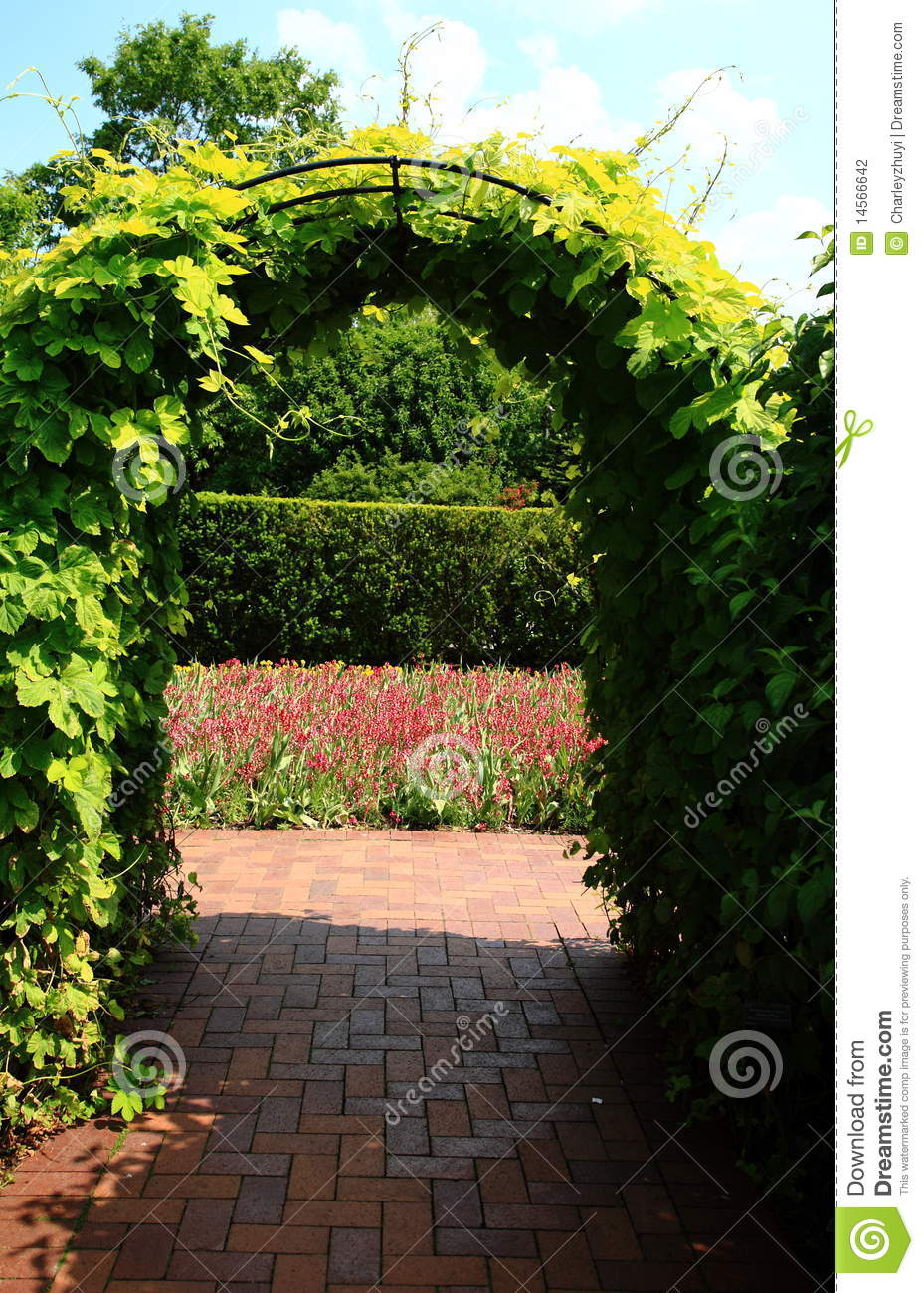 Vines on archway trellis stock photo Image of ve ation