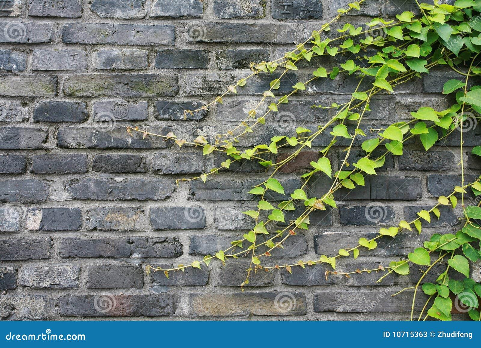 vines on brick wall stock photos image 10715363. Black Bedroom Furniture Sets. Home Design Ideas