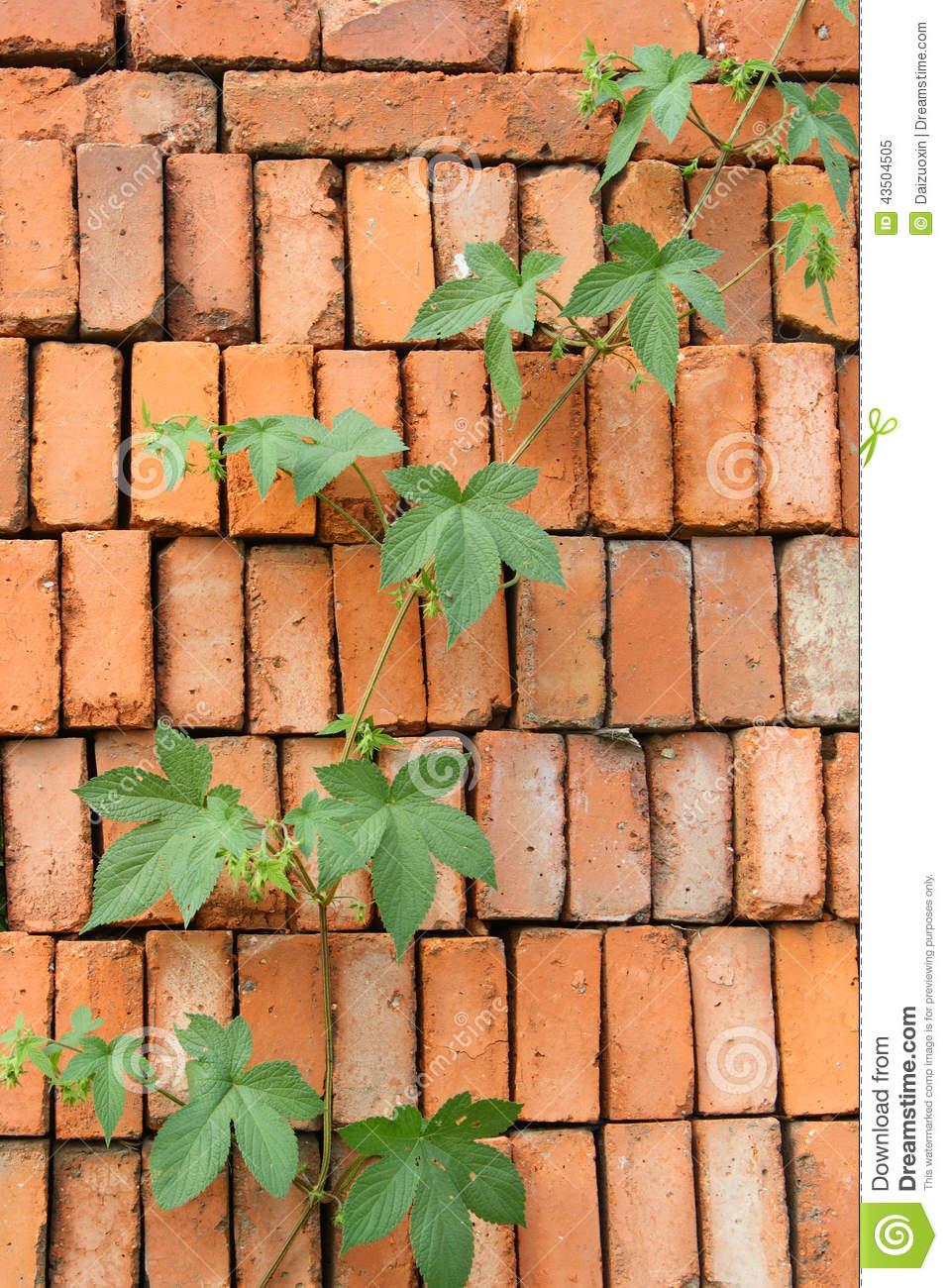 Vines on Brick Wall stock image. Image of leaf, nature ...