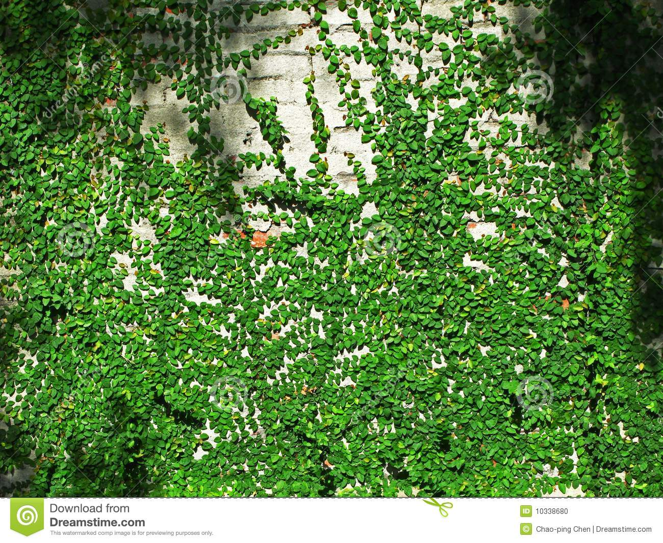 vines climbed on a brick wall stock photo image 10338680. Black Bedroom Furniture Sets. Home Design Ideas