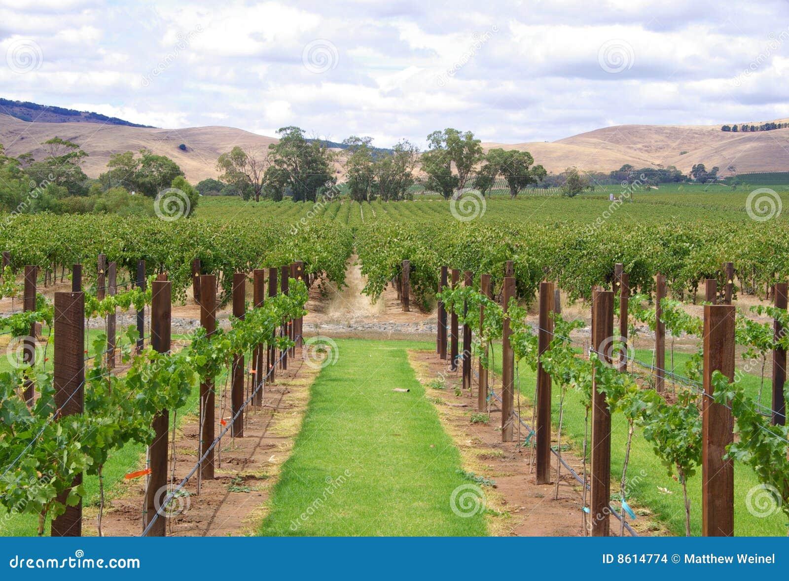 Vines & Hills