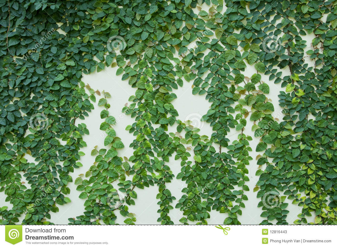 Vines On The Wall Stock Photos Image 12816443