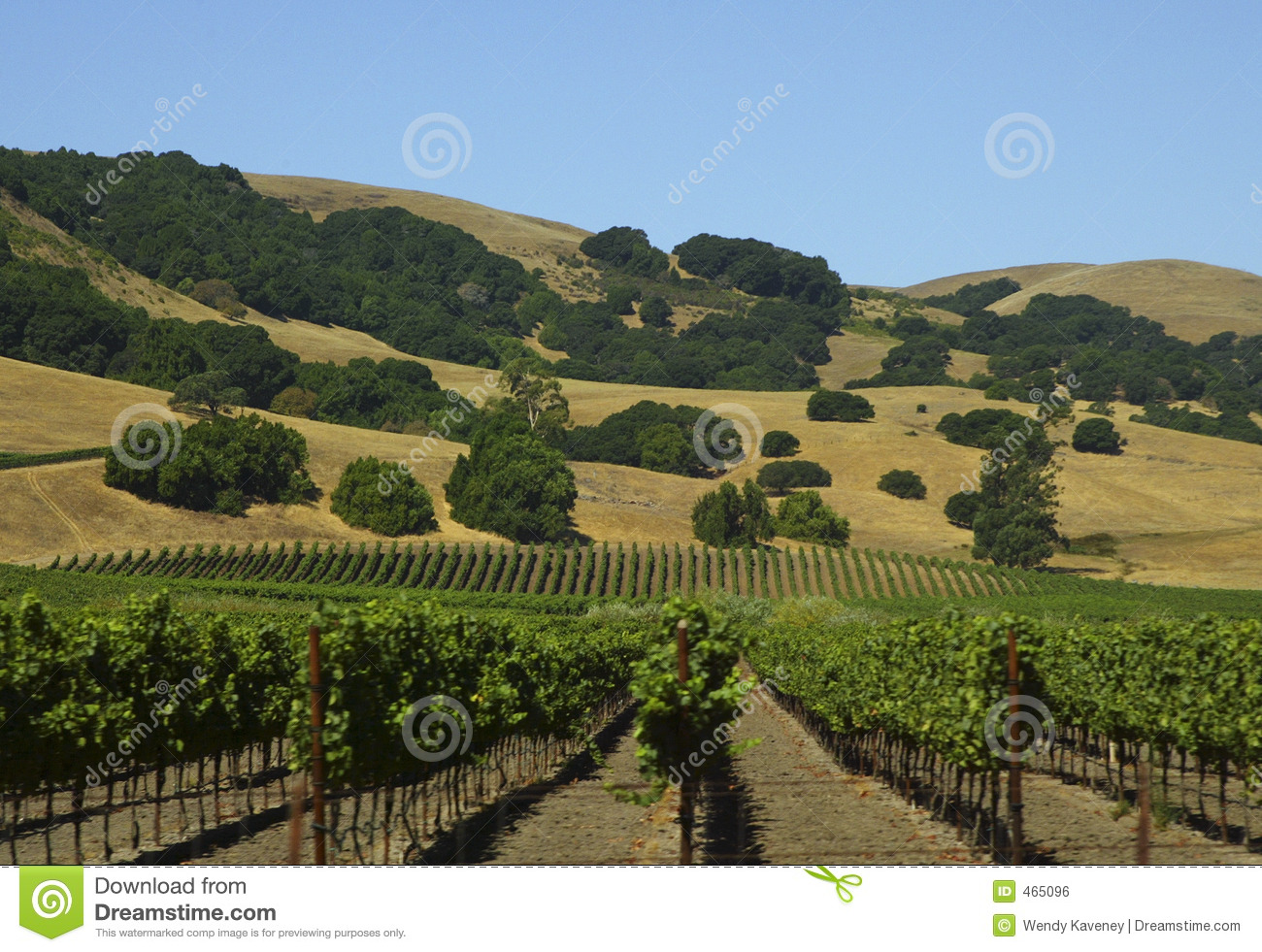 Download Vineyard stock photo. Image of california, agriculture - 465096