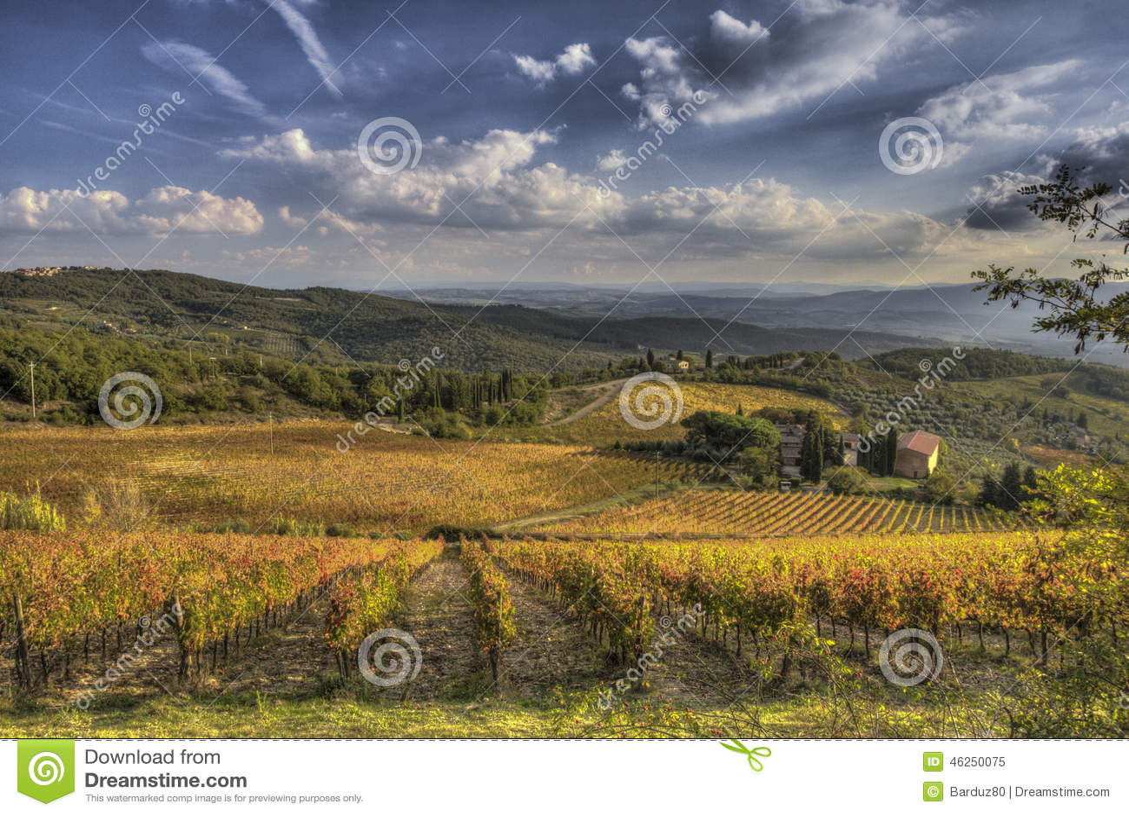 Vineyard of Chianti