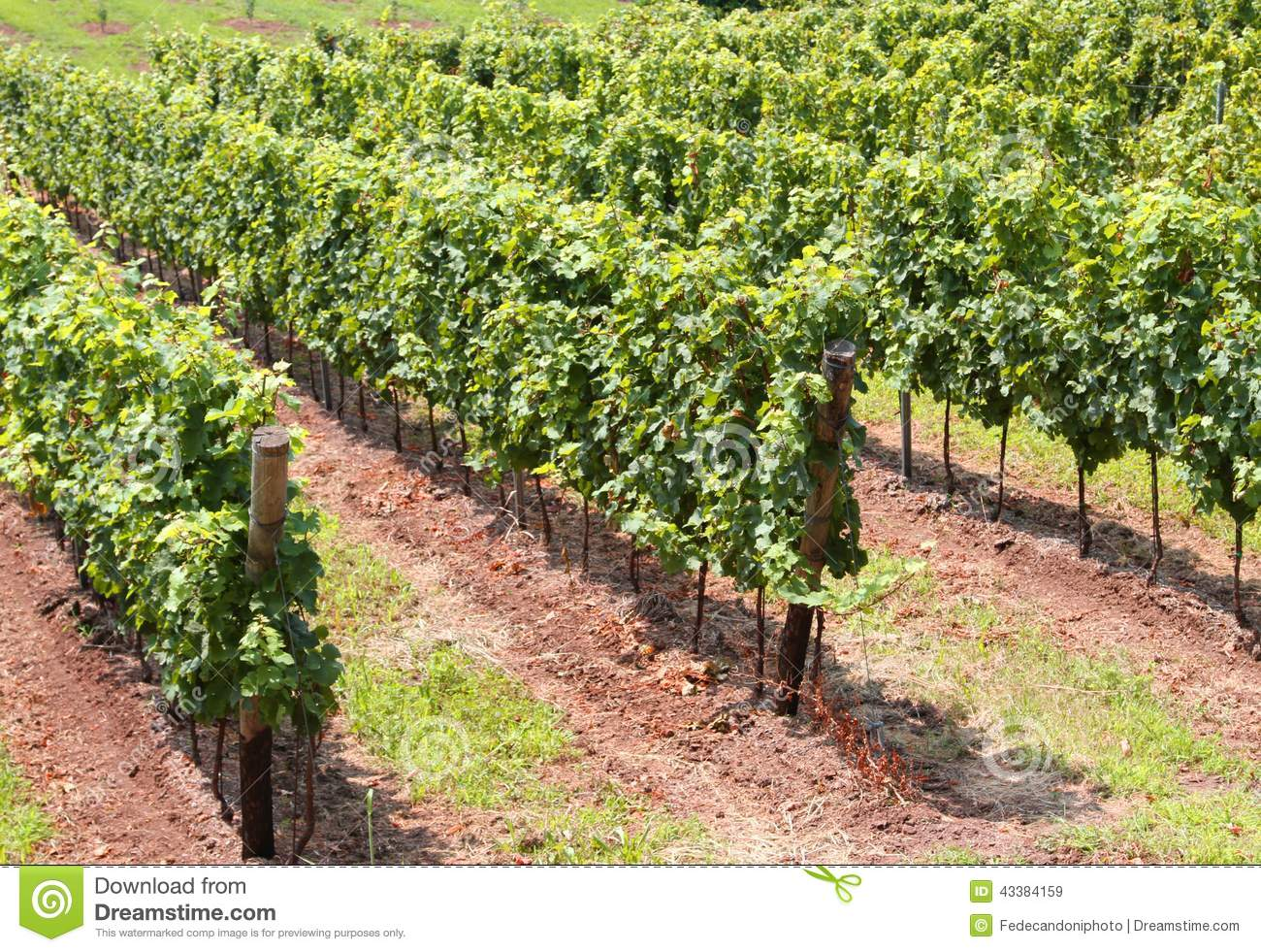 production of red wine How to make mass-produced wine taste great share  the cost to produce wine has risen 17 percent  this can make a tough and somewhat bitter red wine ready to.