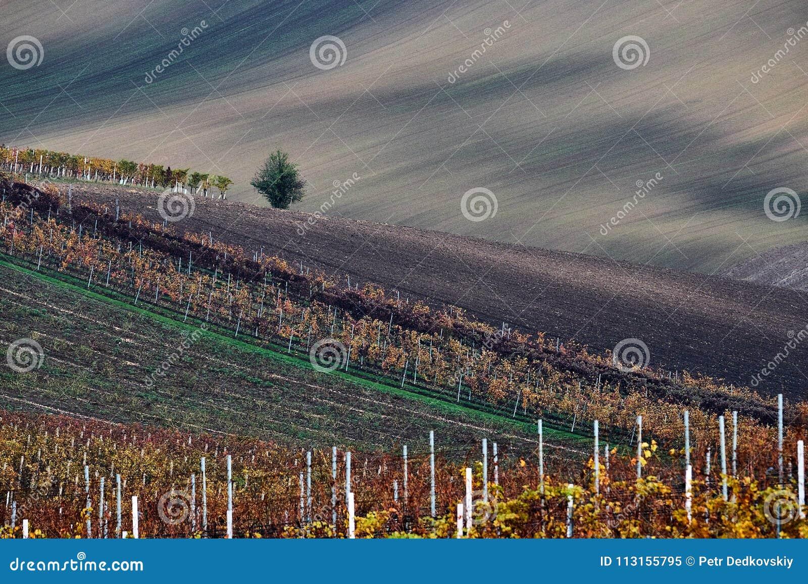 Vineyard and fields in autumn, South Moravia.Czech Republic.