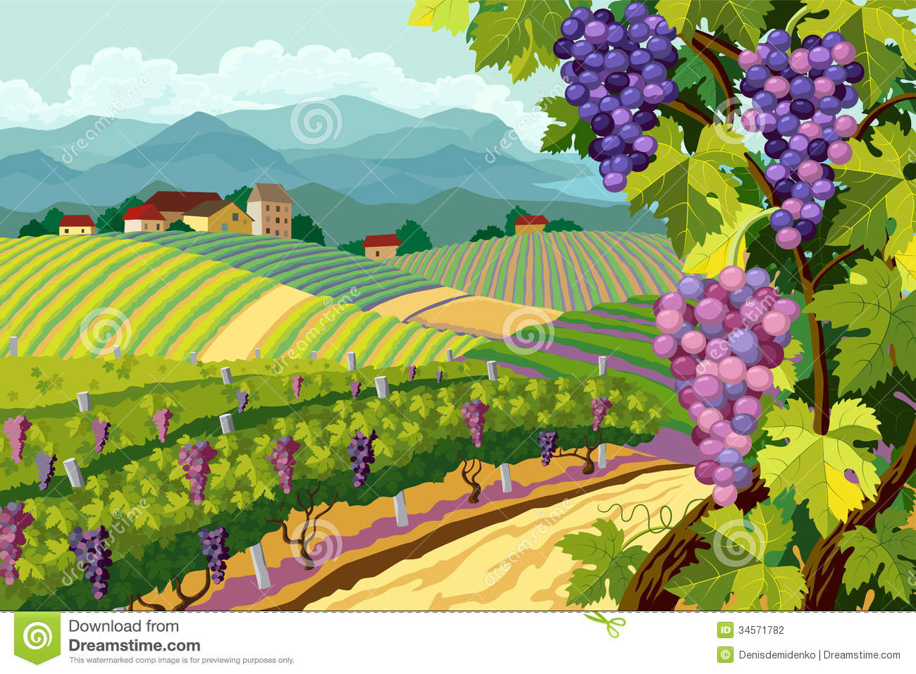 Vineyard And Grapes Bunches Stock Photography - Image: 34571782
