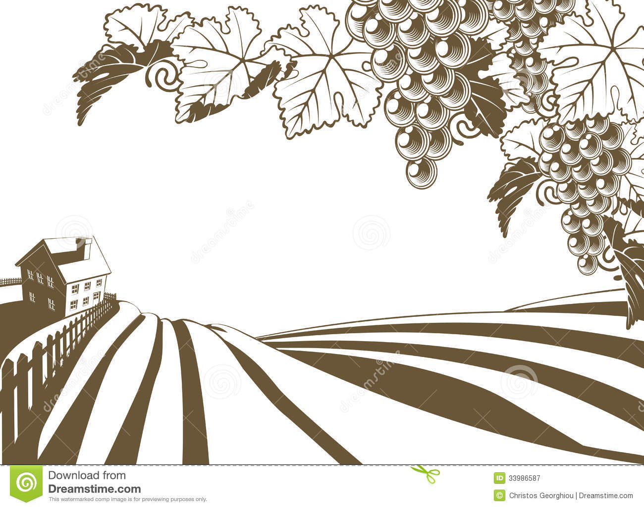 Vineyard Grapevine Farm Illustration Royalty Free Stock Photography ...