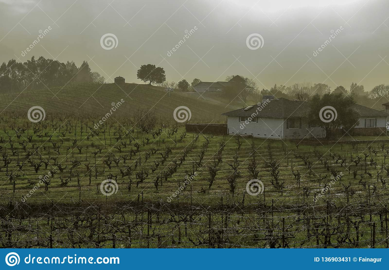 Vineyard hill with rows of grape vines, houses, and trees